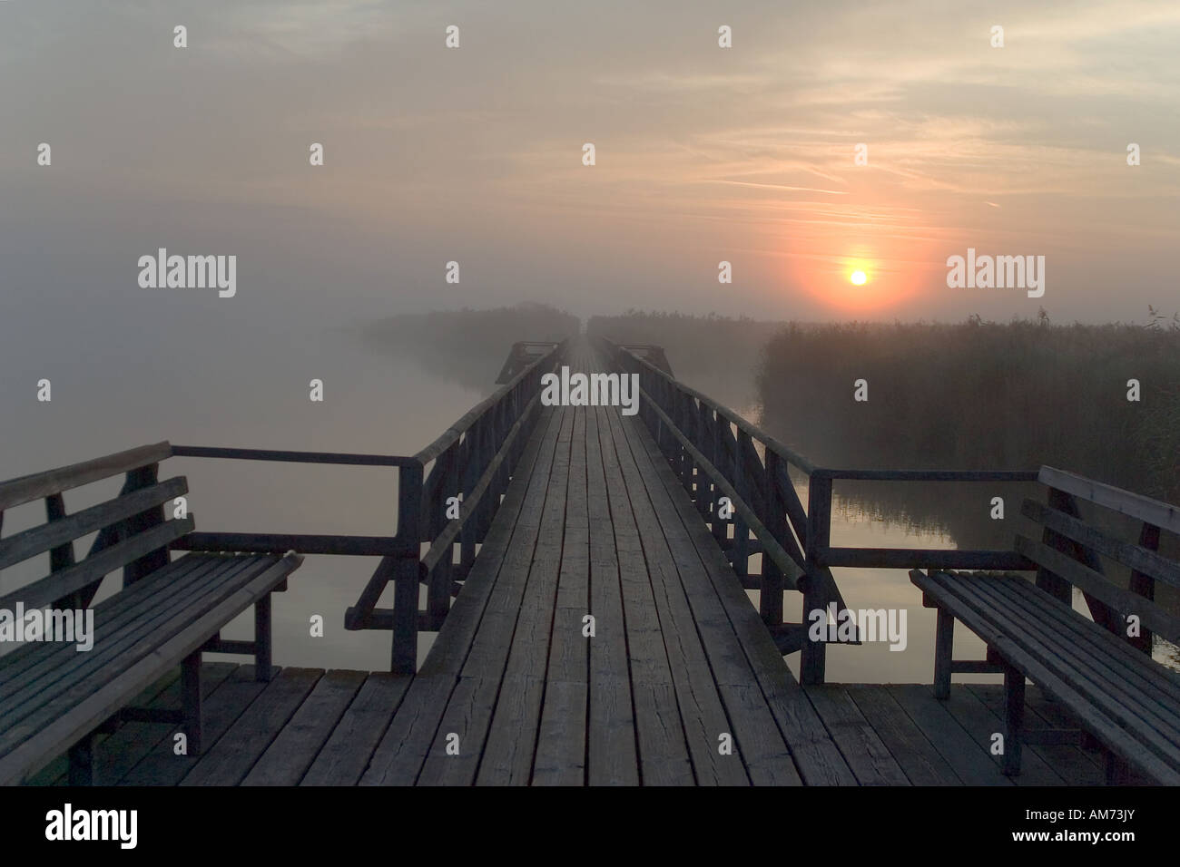 Federsee in the morning, sunrise, nature reserve, Upper Swabia, Germany Stock Photo