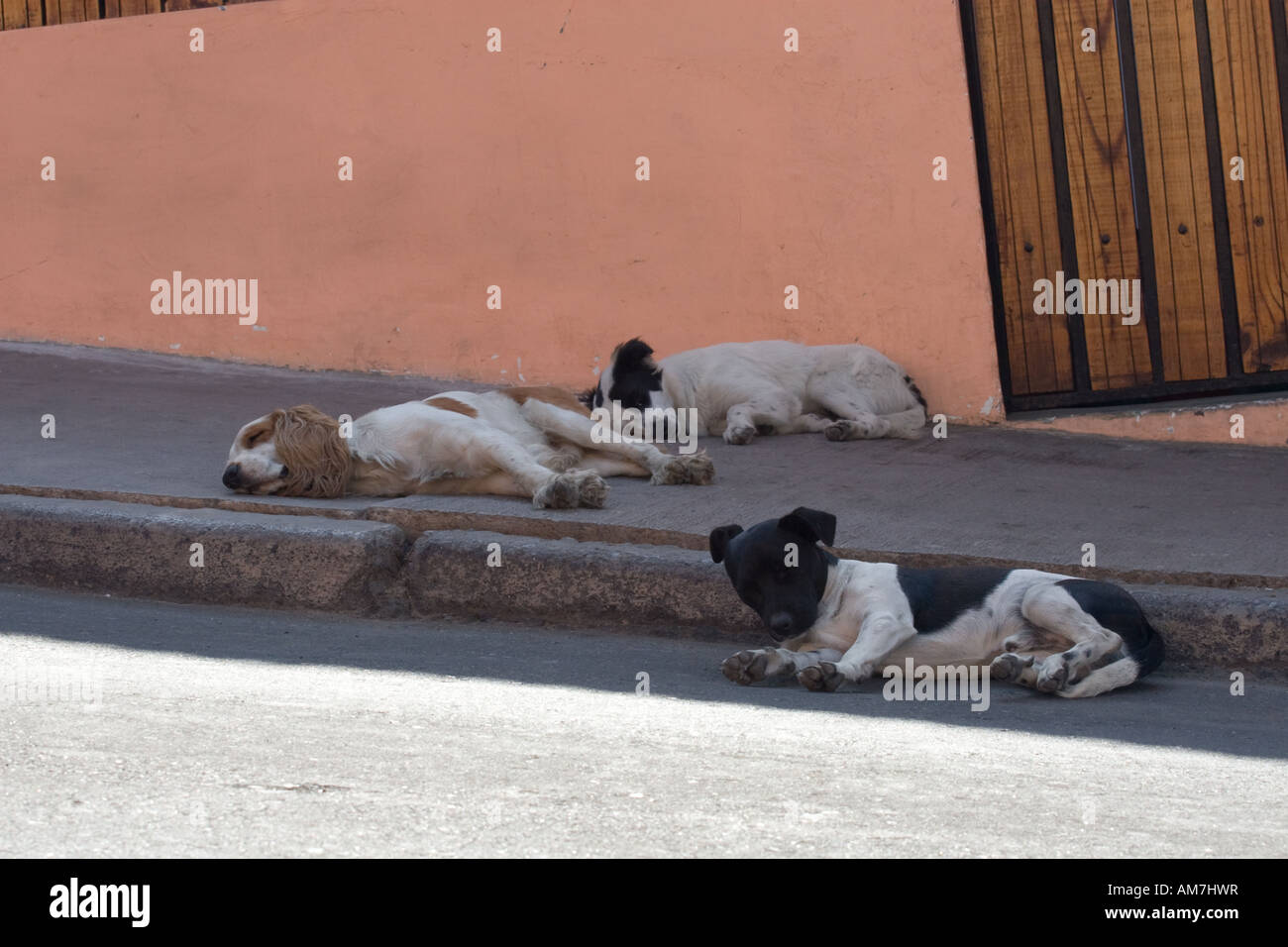 Sleeping dogs in Arica, Chile - Stock Image