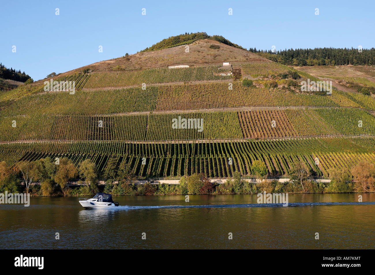 Small motorboat sails in front of autumn vineyards at the Mosel near Longuich, Trier, Rhineland-Palatinate, Germany Stock Photo