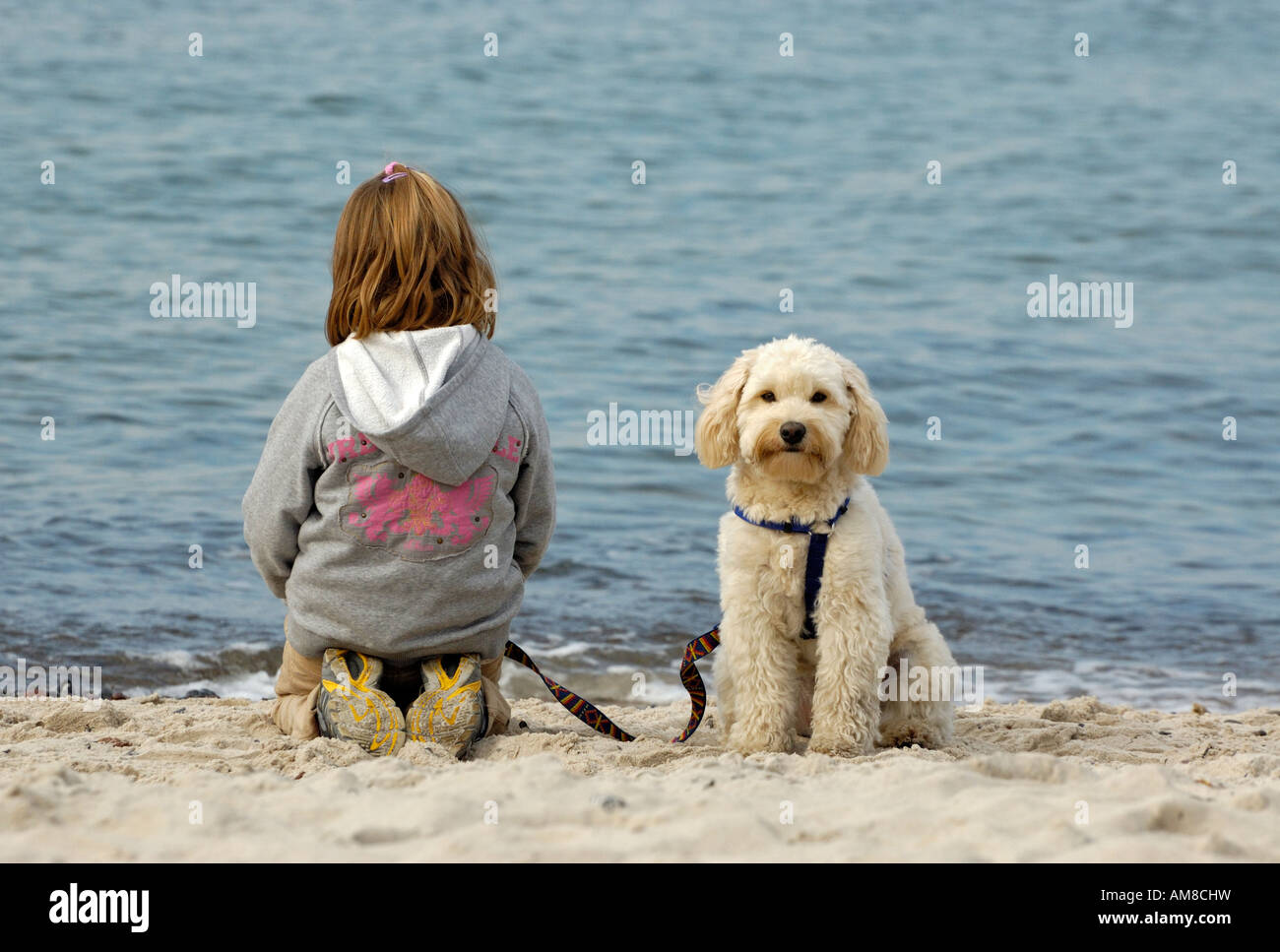young child with small white pet dog on beach. - Stock Image