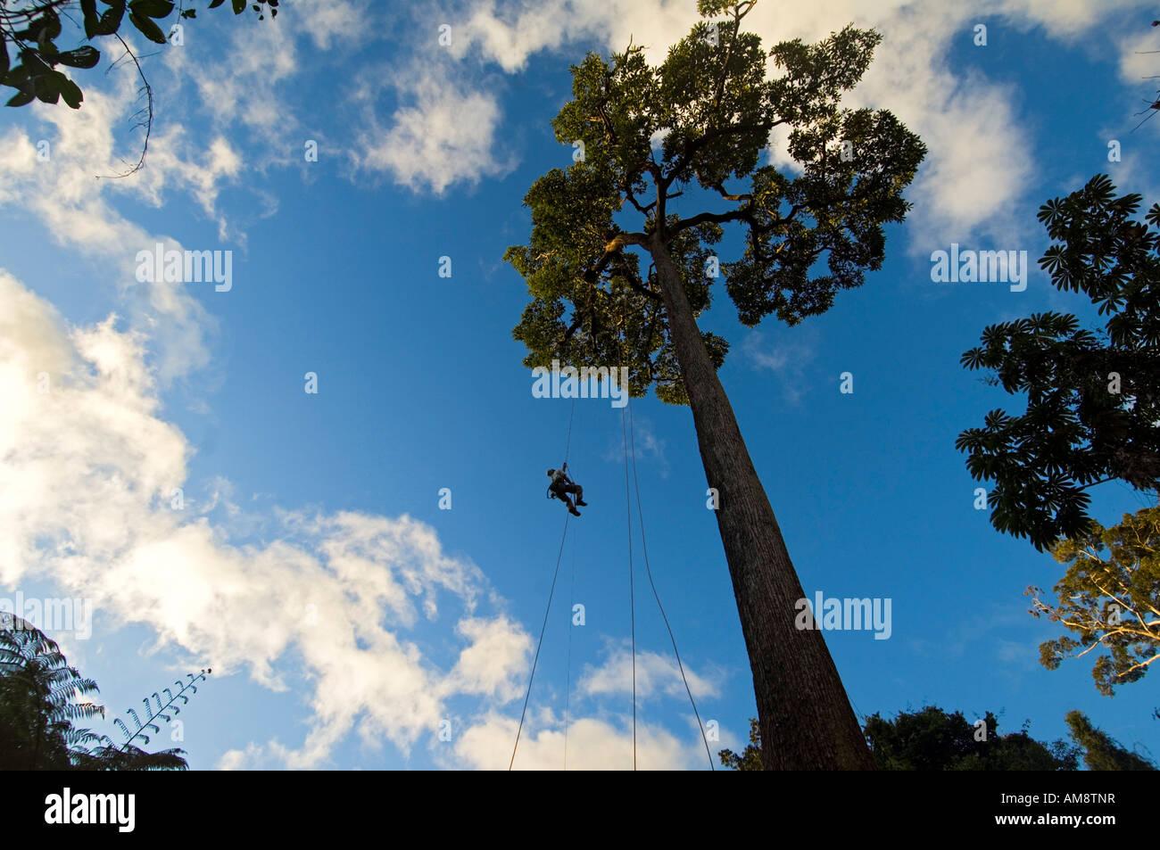 Tree climbing at Abra144 Amazonian ecovillage - Stock Image