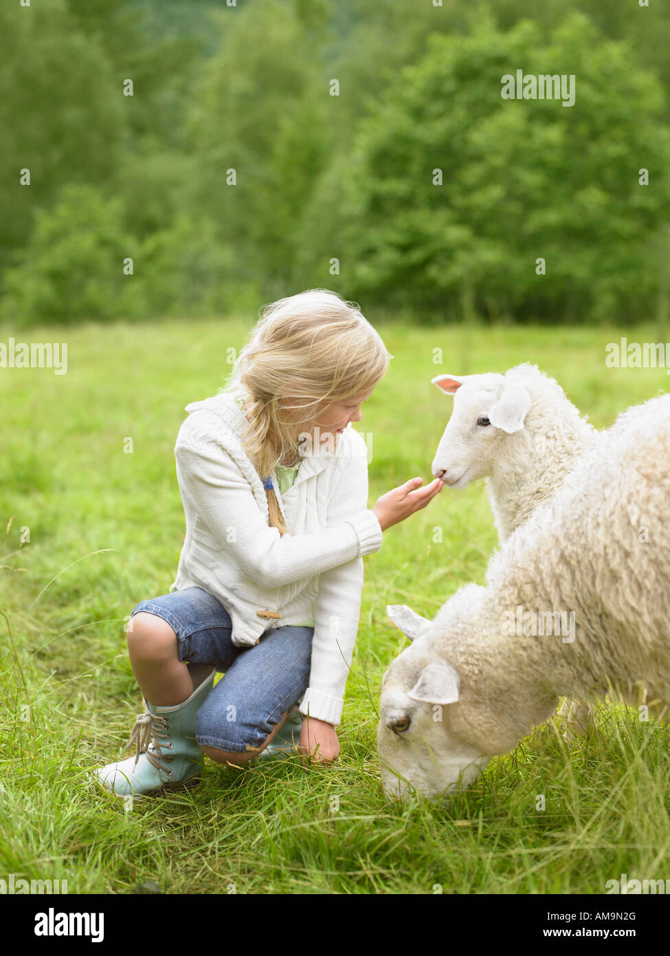 Young girl smiling and crouching by lamb in a field. Stock Photo