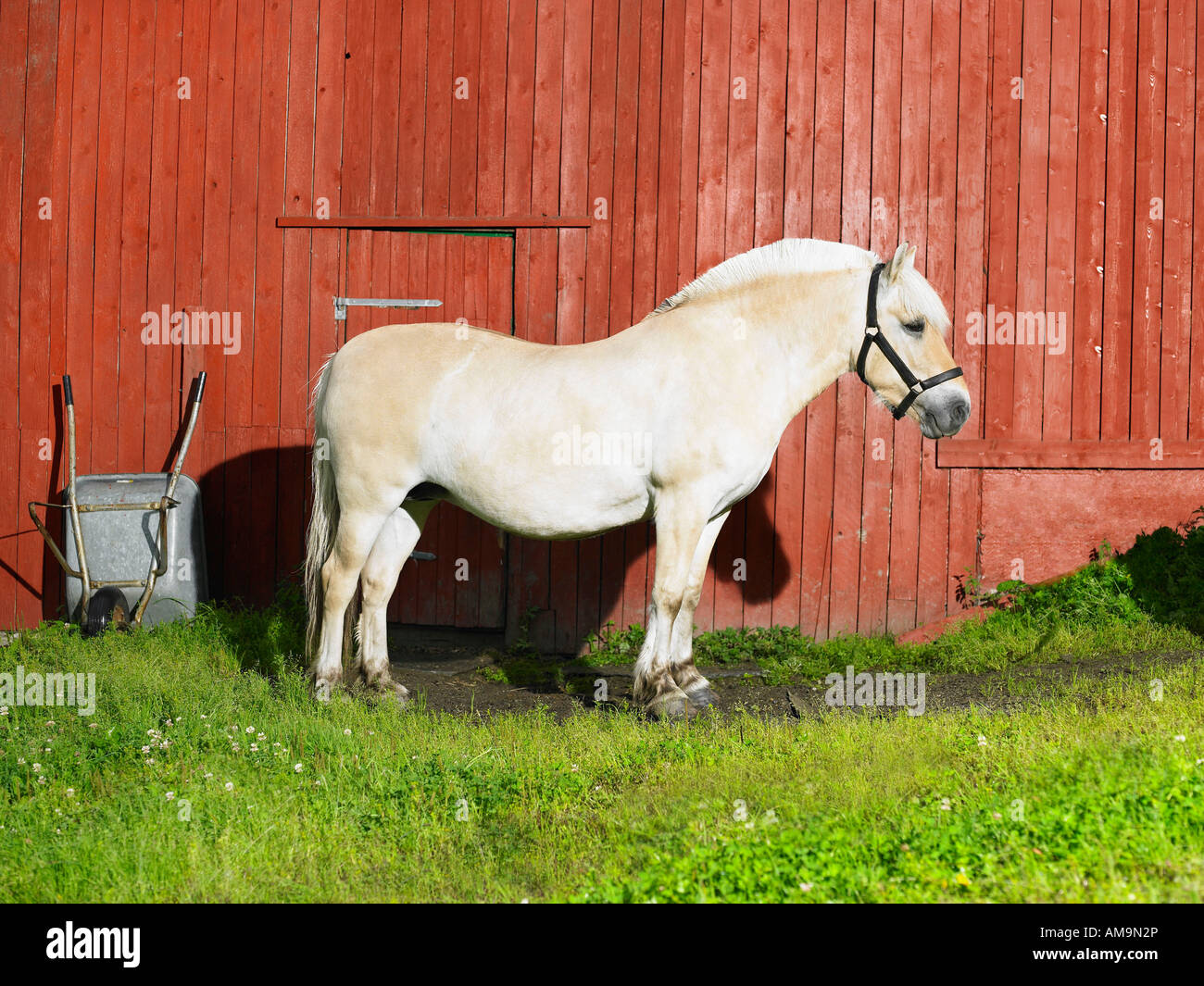 Horse standing alone in front of a red wall. - Stock Image