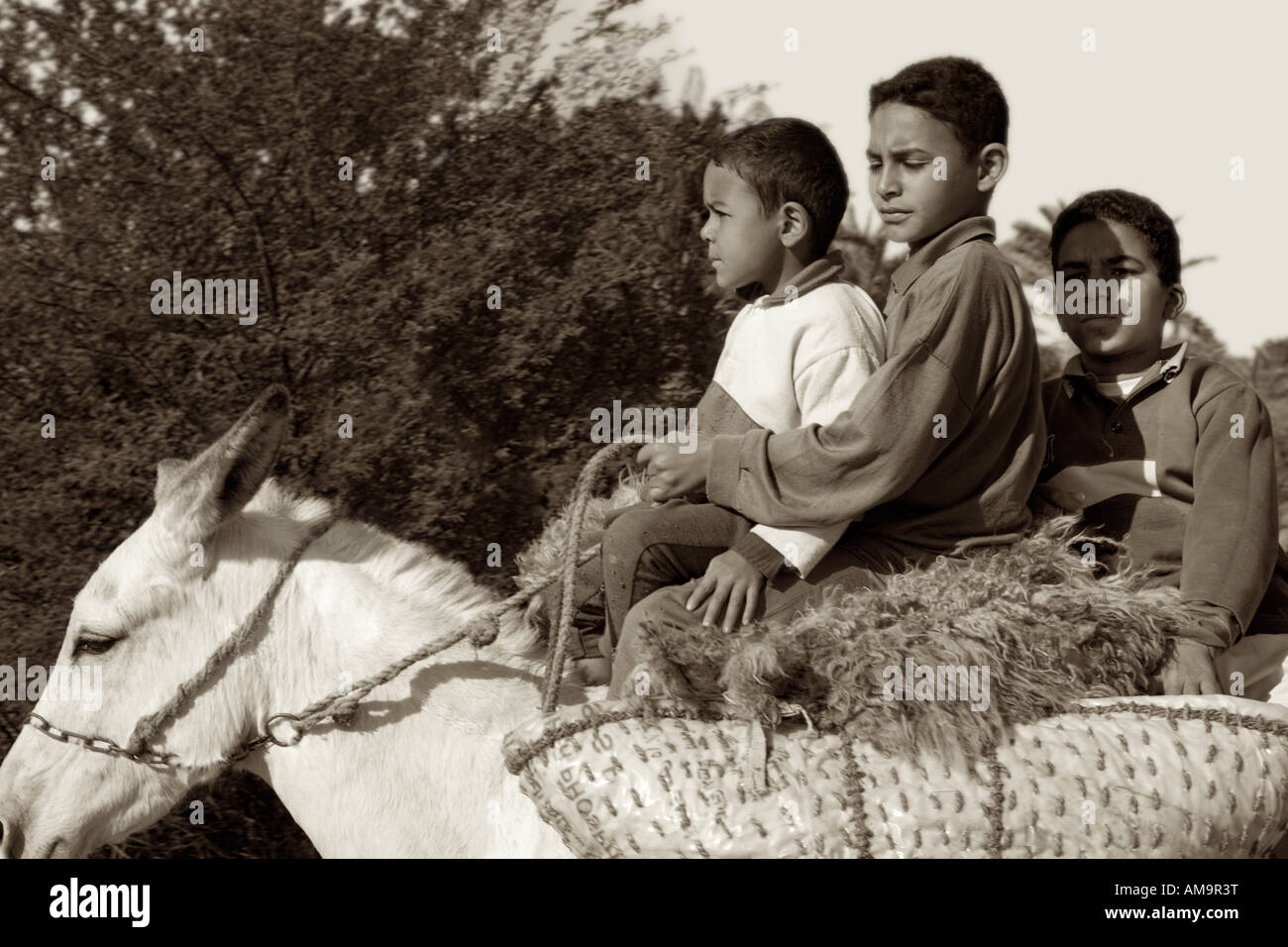Three boys riding on donkey with supplies in baskets, Middle Egypt Africa Stock Photo