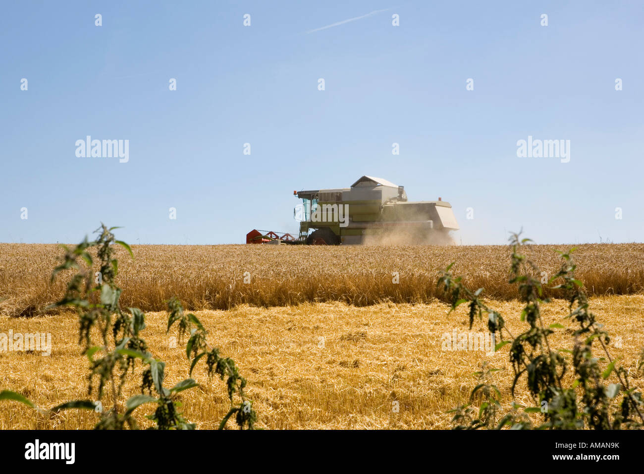 A combine harvester in a wheat field - Stock Image