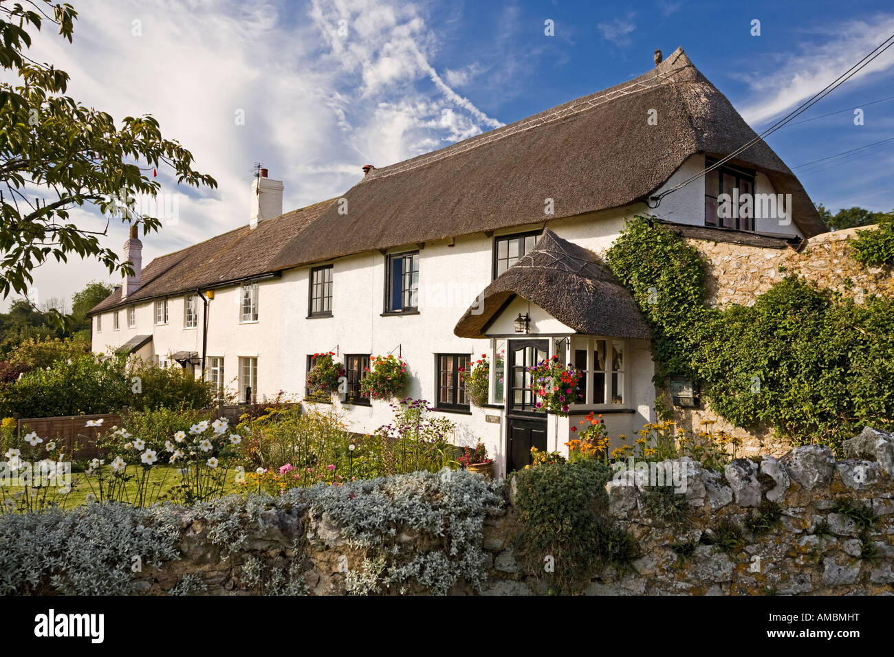 Thatched cottage with pretty English garden in the village of Shute, East Devon, England, UK in summer - Stock Image