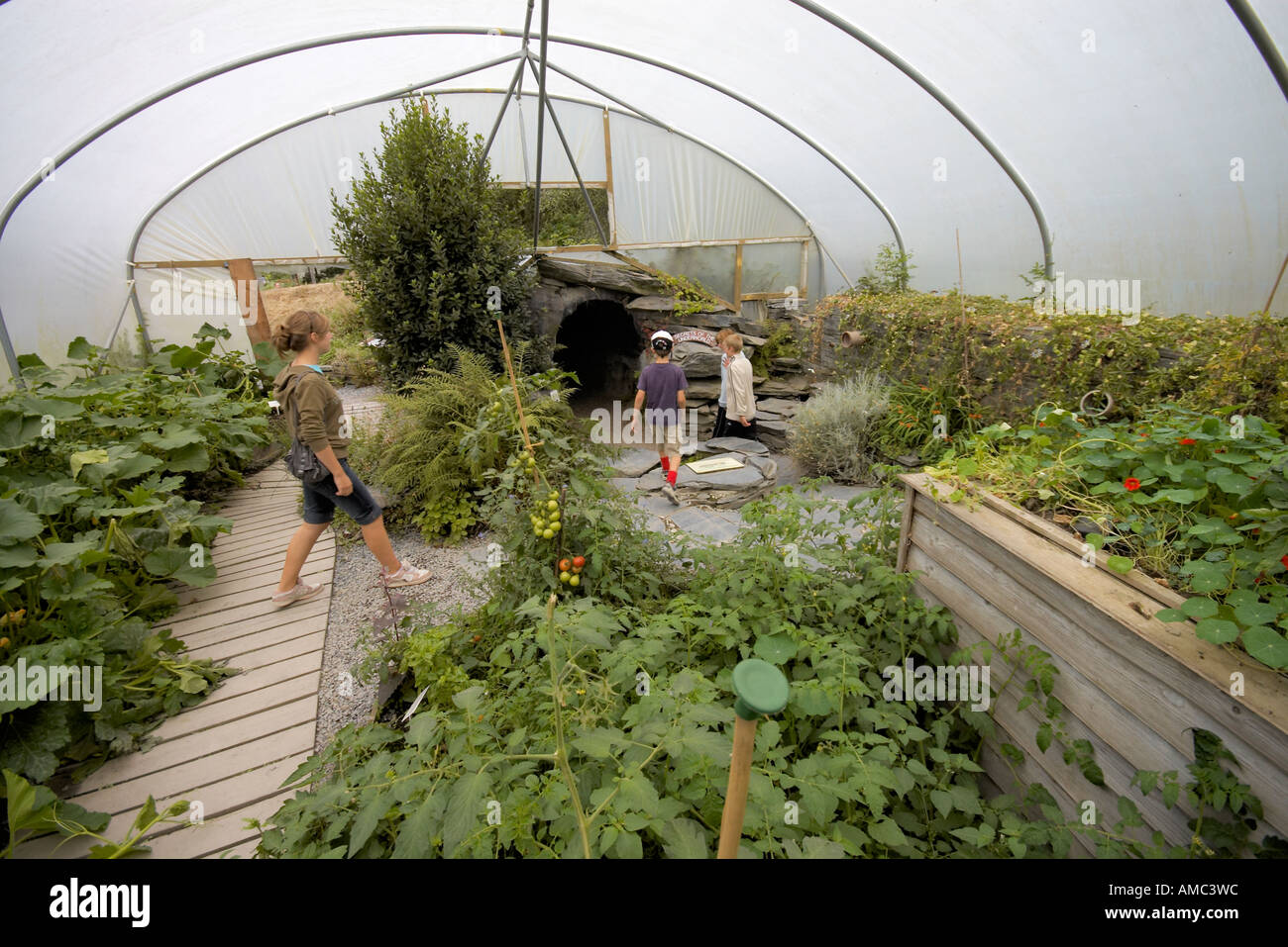 plants growing in a large polytunnel at the Centre for Alternative Technology Machynlleth Wales - Stock Image