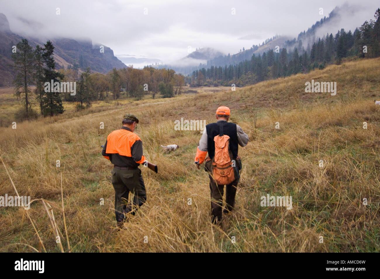 Upland Bird Hunter Guide and English Setter Hunt in the Rain and Mist Flying B Ranch Near Kamiah Idaho Stock Photo
