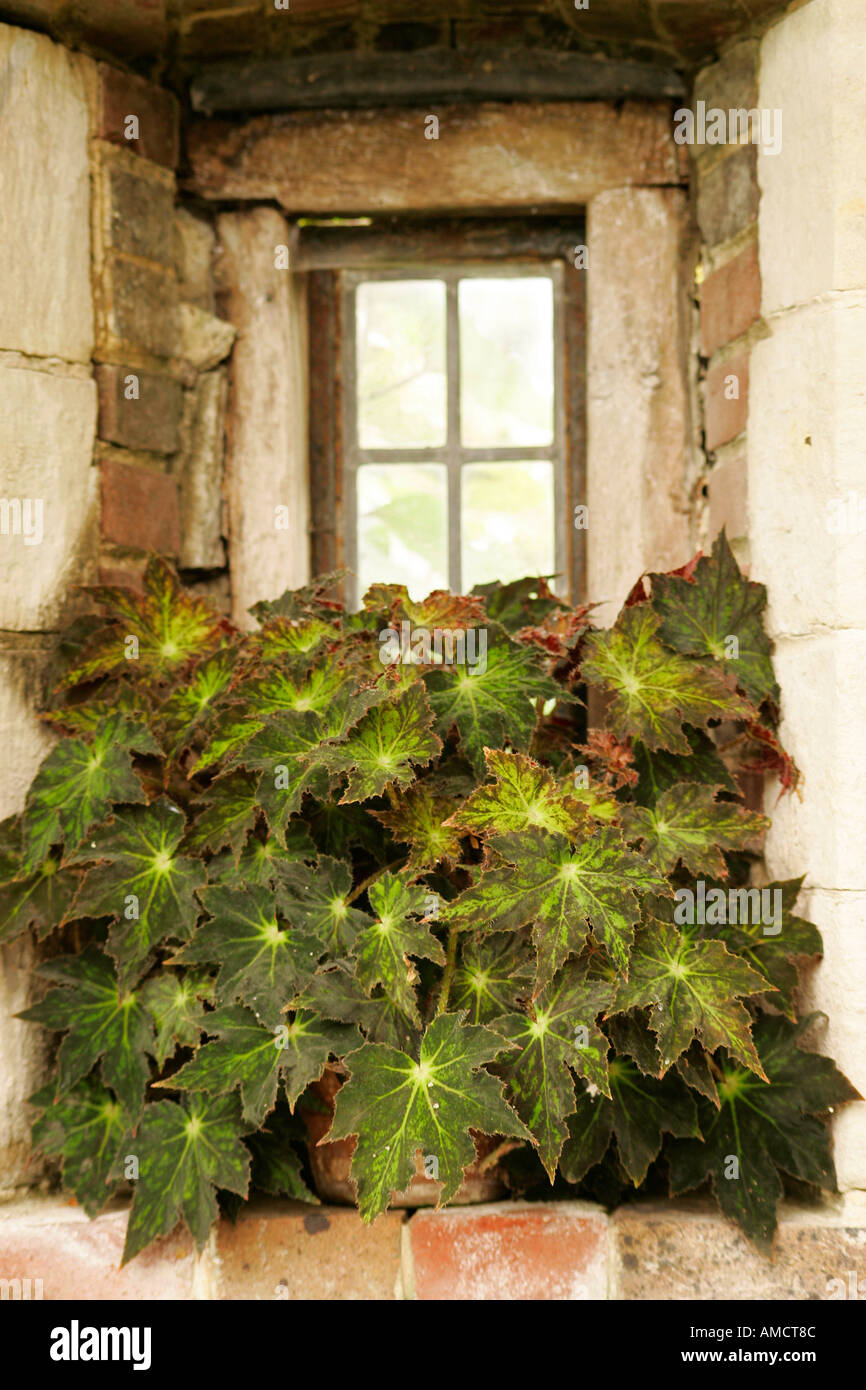 Potted green plant placed on sill of old stone recessed window - Stock Image