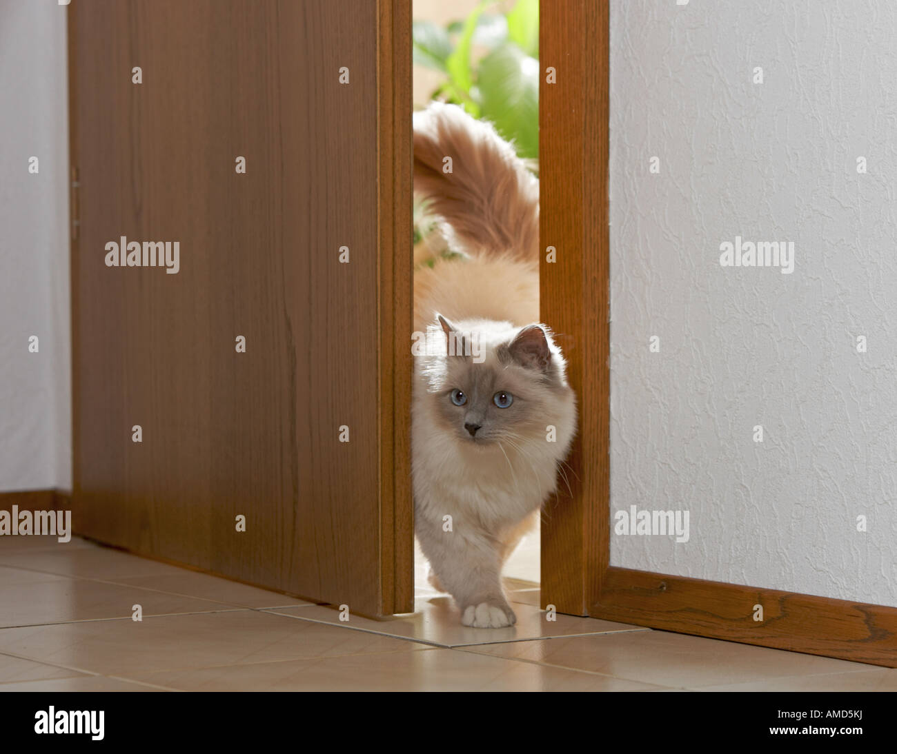 cat out cutting small kitty doors garbage goals custom hole door catdoor a
