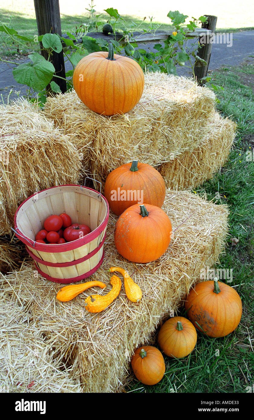Pumpkins squash and tomatoes on bales of hay - Stock Image
