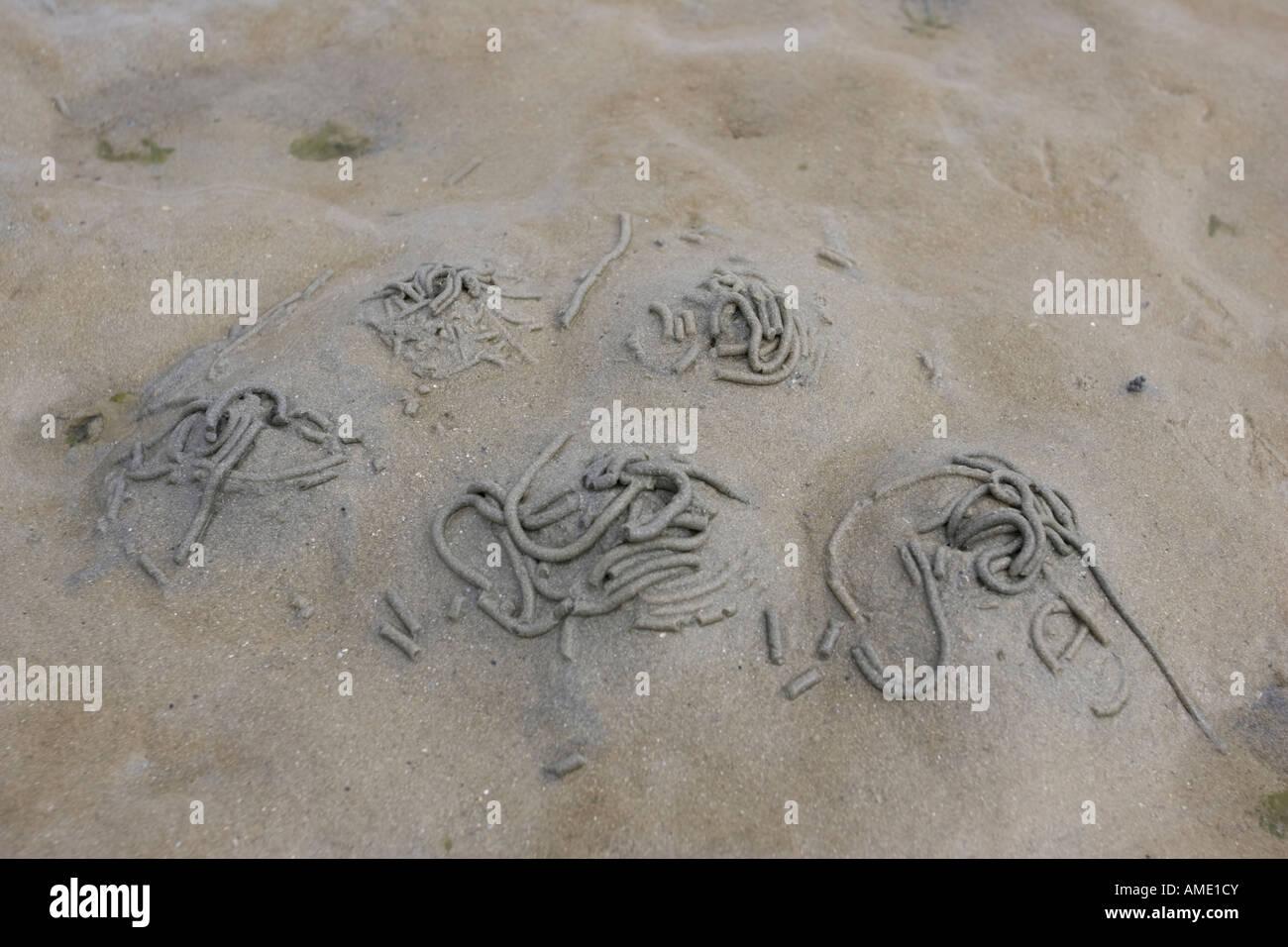 Lugworm casts on sandy beach Normandy France - Stock Image