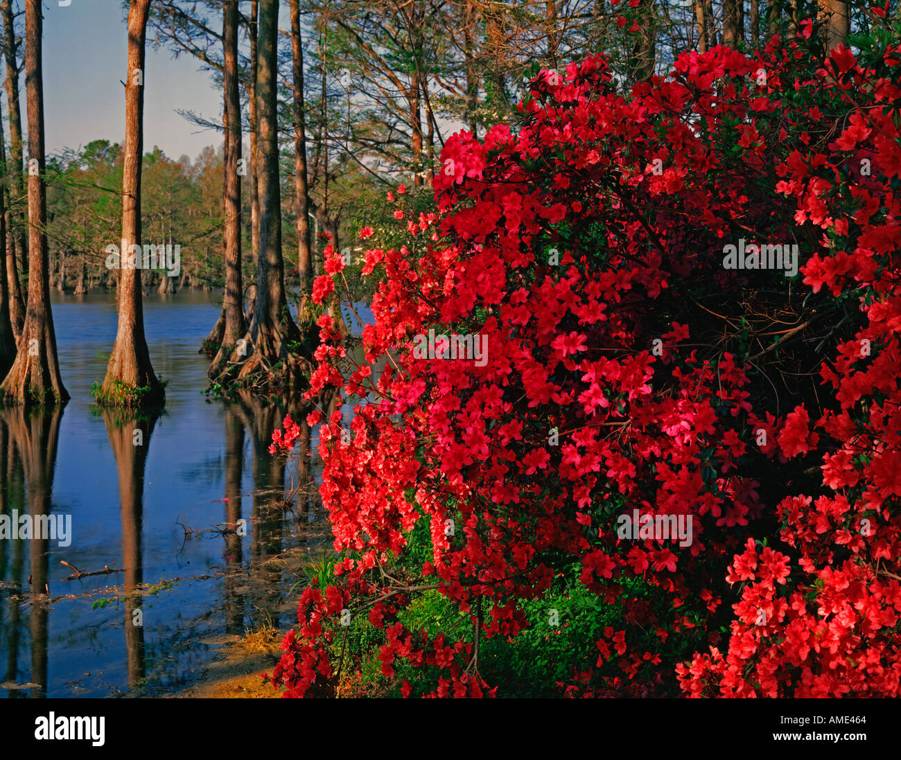 Greenfield Gardens at Wilmington in North Carolina showing a city park ablze with azaleas and other Spring blooming Stock Photo