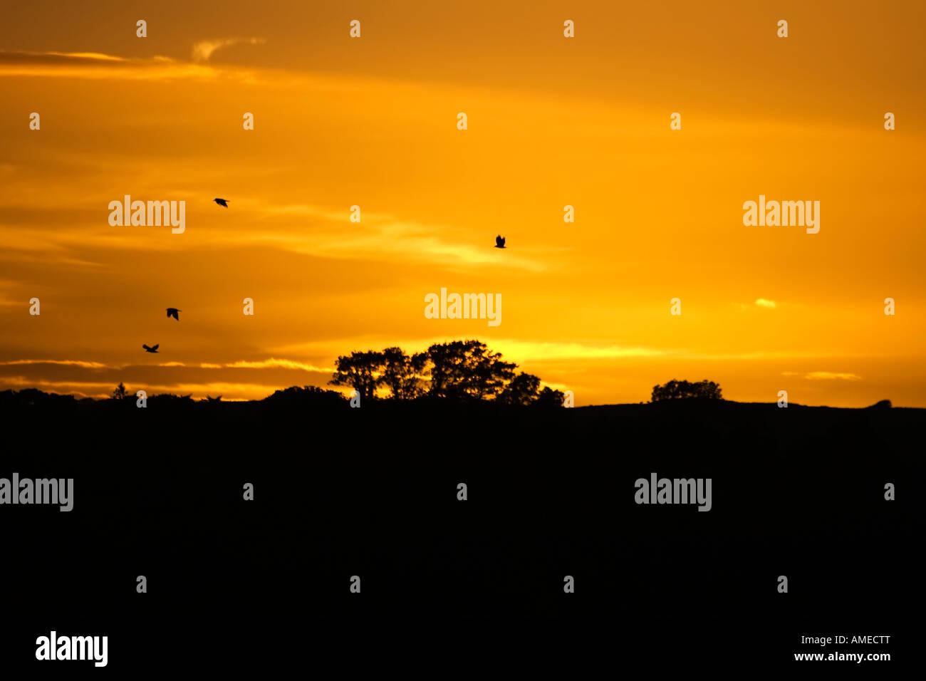 Birds flying across a sunset - Stock Image