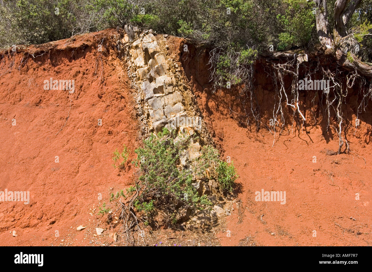 Volcanic dyke. Mass of igneous rock intruded into older red iron rich sedimentary rock. 1km north of Garajonay summit, La Gomera - Stock Image