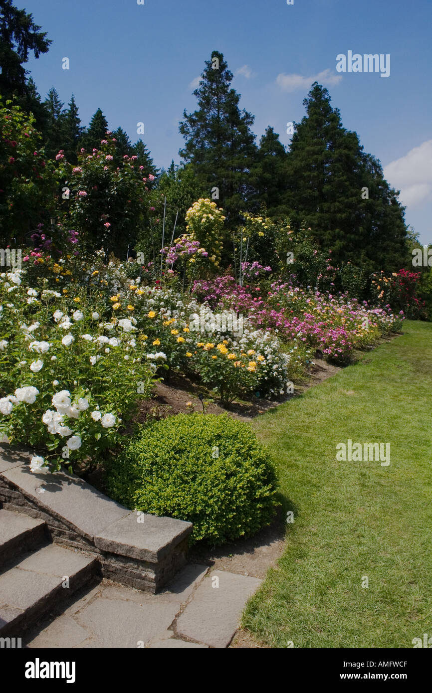 the portland rose garden also known as the international rose test garden has more than 8 000 rose plants portland oregon - Portland Rose Garden