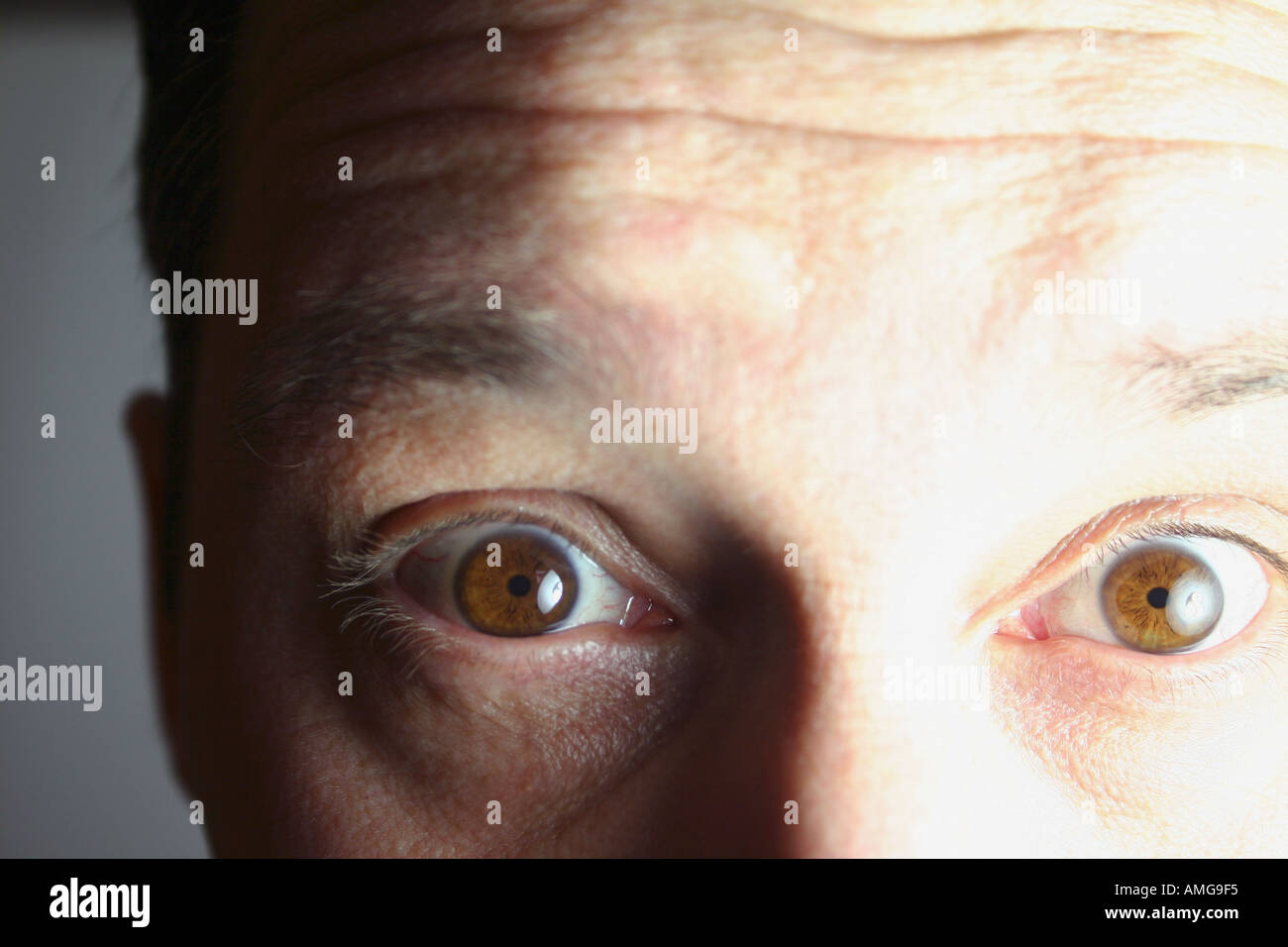 close up and personal hypnotic brown eyes stock photo 2820596 alamy