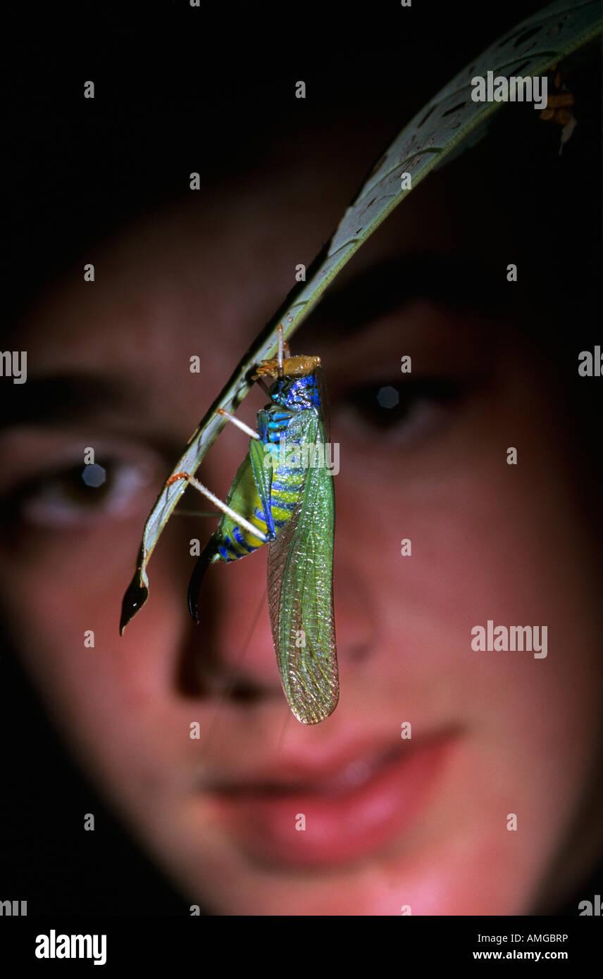 American high school student with Crayola katydid (Vestria sp.) in Peruvian Amazon - Stock Image