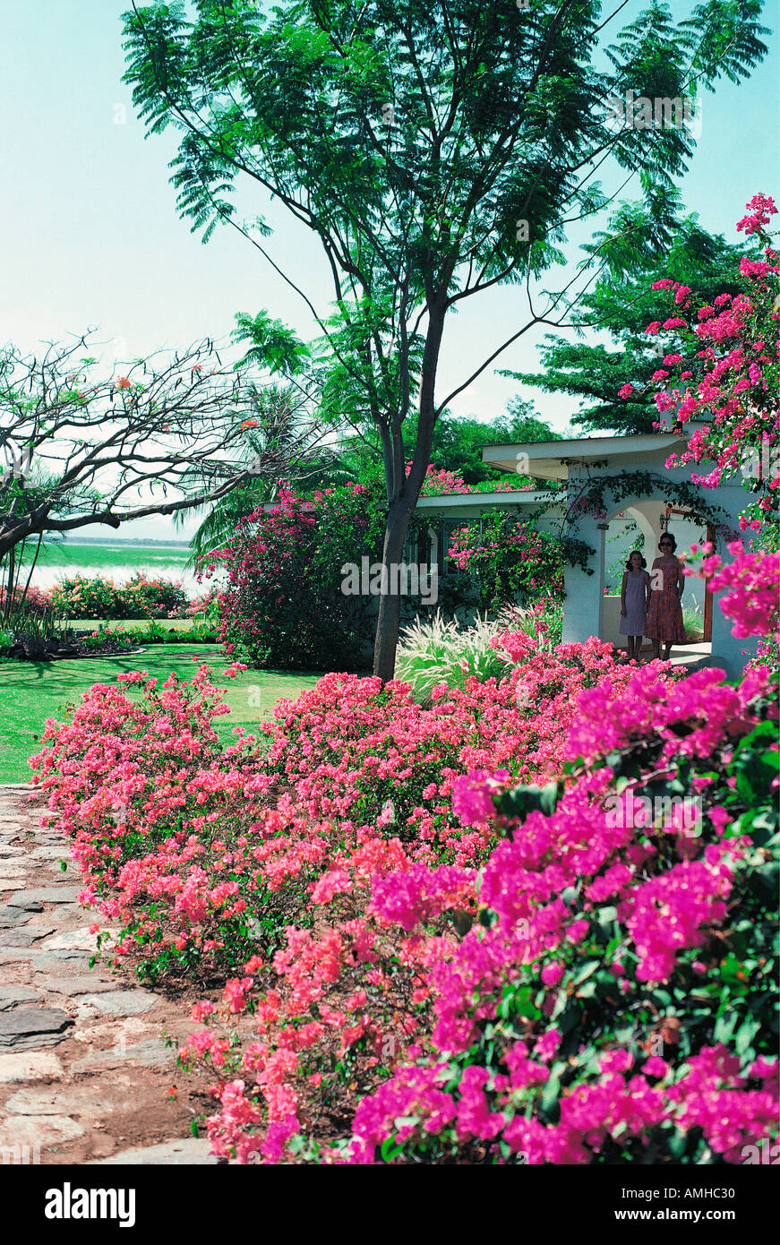 Bougainvillea bushes with red pink and mauve flowers in the grounds of Lake Baringo Club - Stock Image