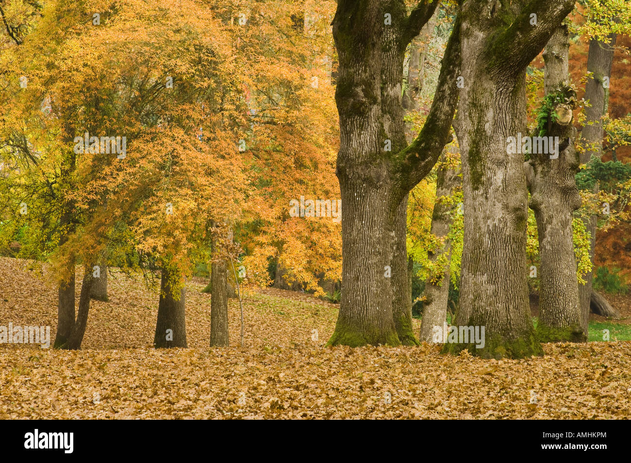 Bushs Pasture Park in Autumn Salem Oregon - Stock Image