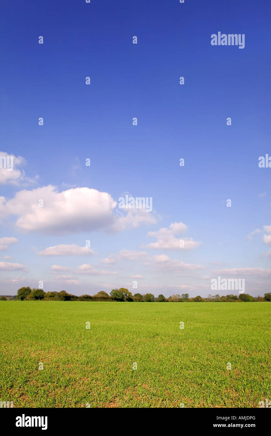 Bright blue sky landscape with a tree line beyond a green field - Stock Image