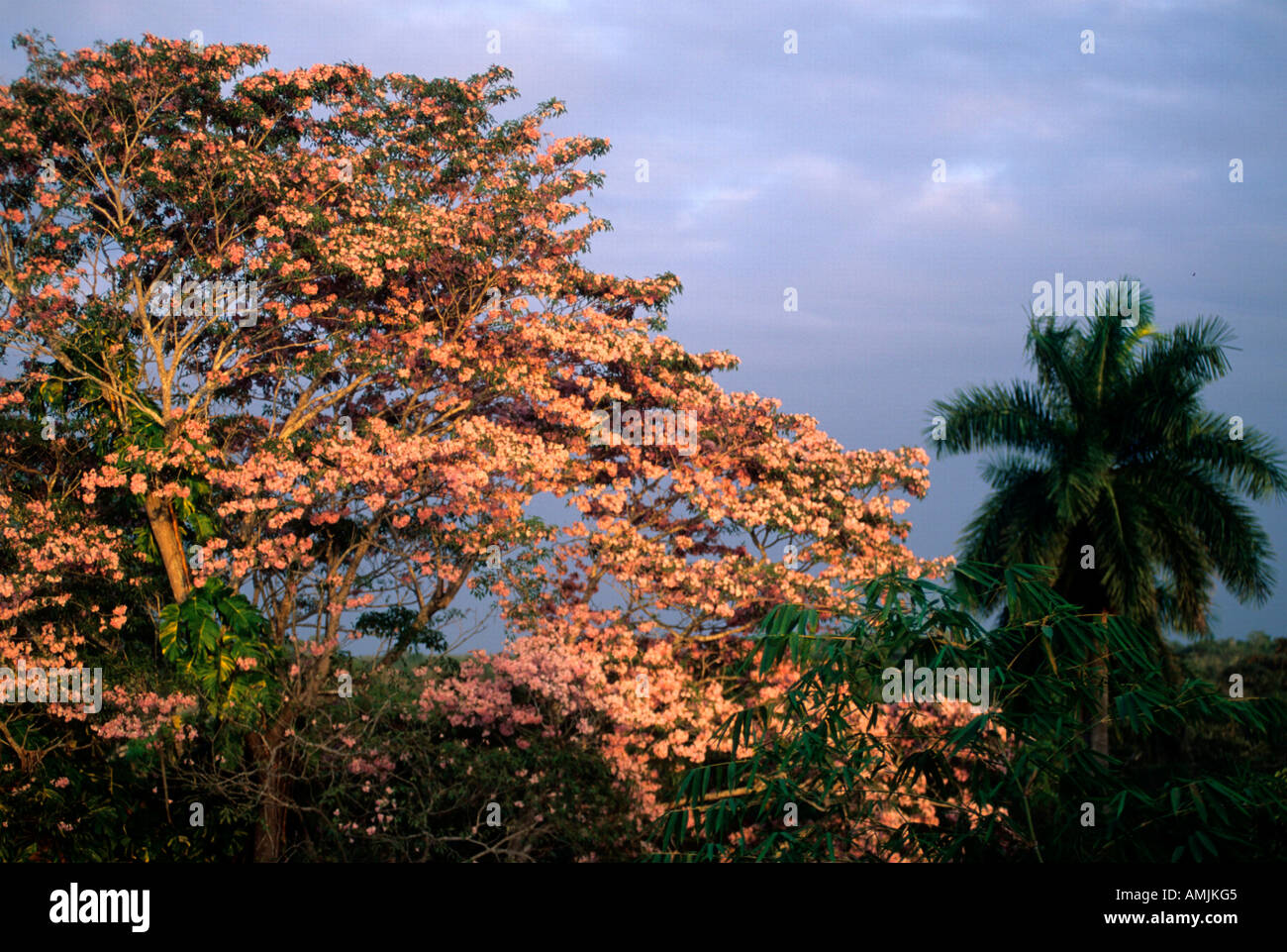 Mexiko, Yucatan, tropische Vegetation - Stock Image