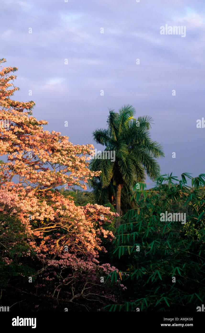 Mexiko, Yucatan, Uxmal, tropische Vegetation - Stock Image
