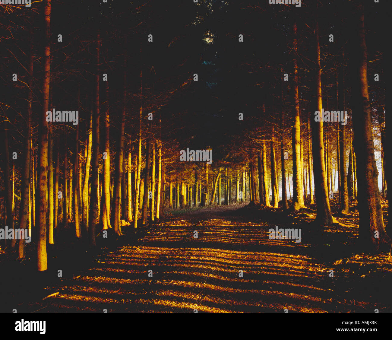 path through forest - Stock Image