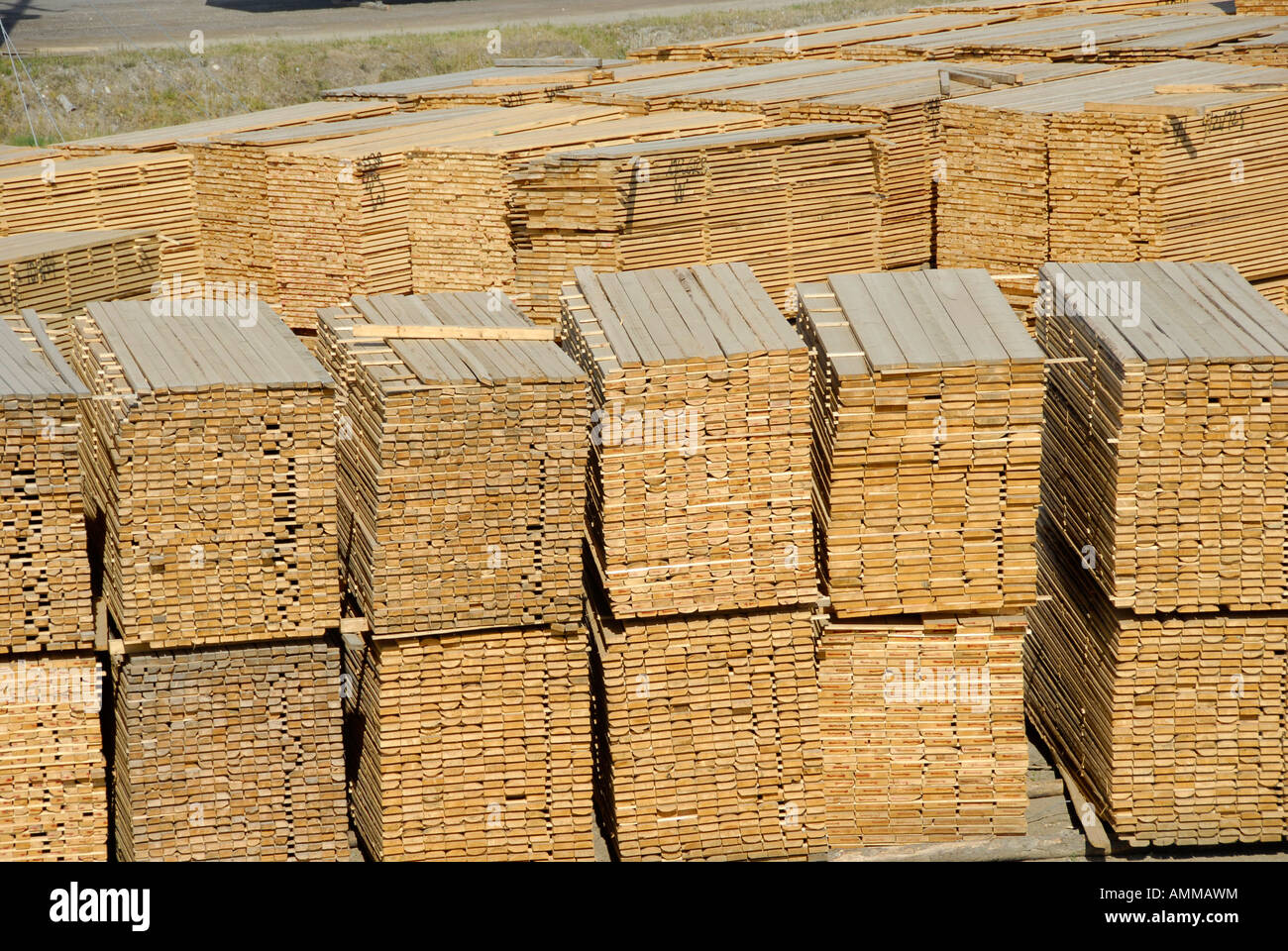 Stacked Lumber Forestry Logging Wood Industry Quesnel British Columbia BC Canada - Stock Image
