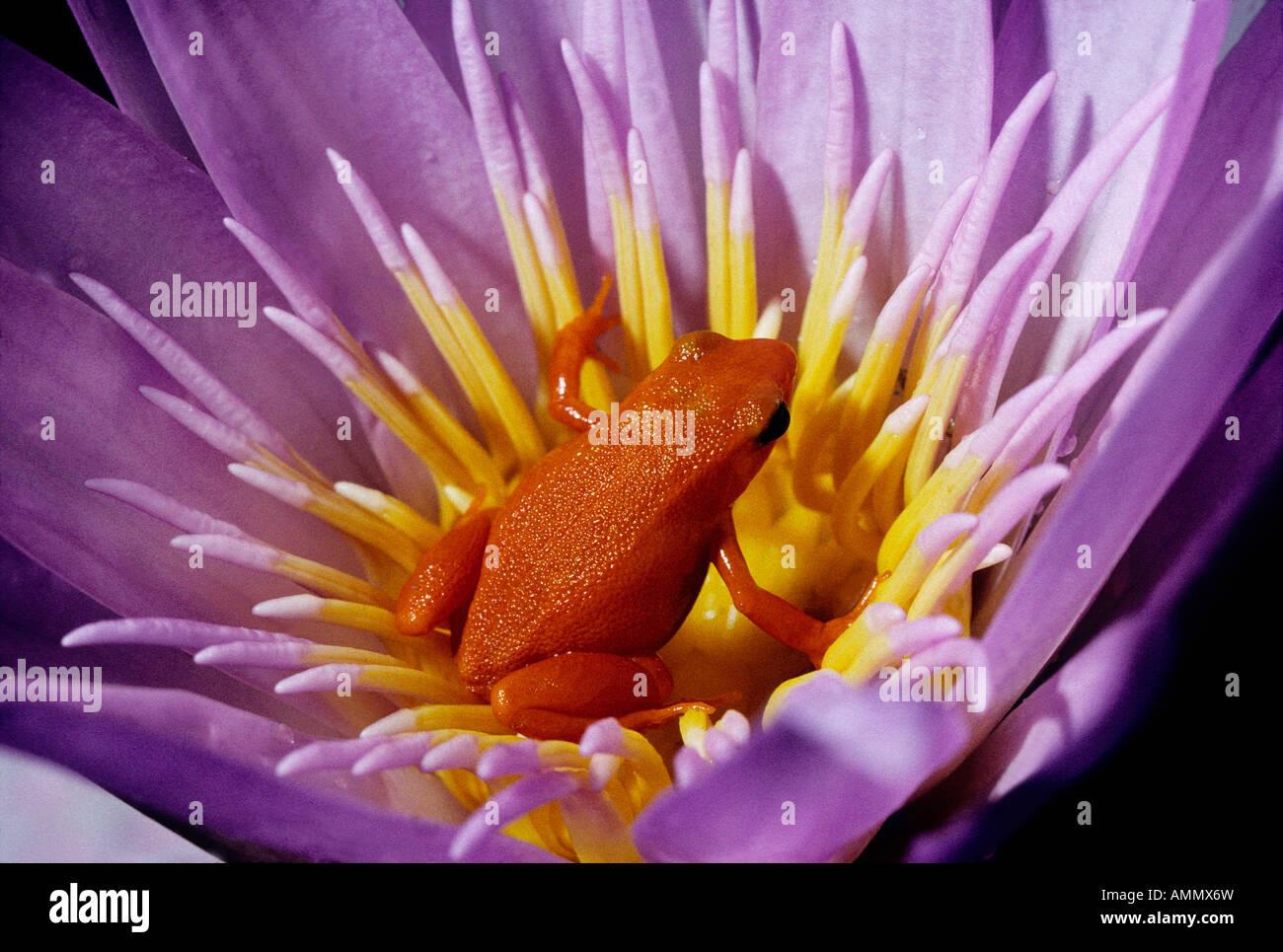 Fleur Stock Photos Fleur Stock Images Alamy