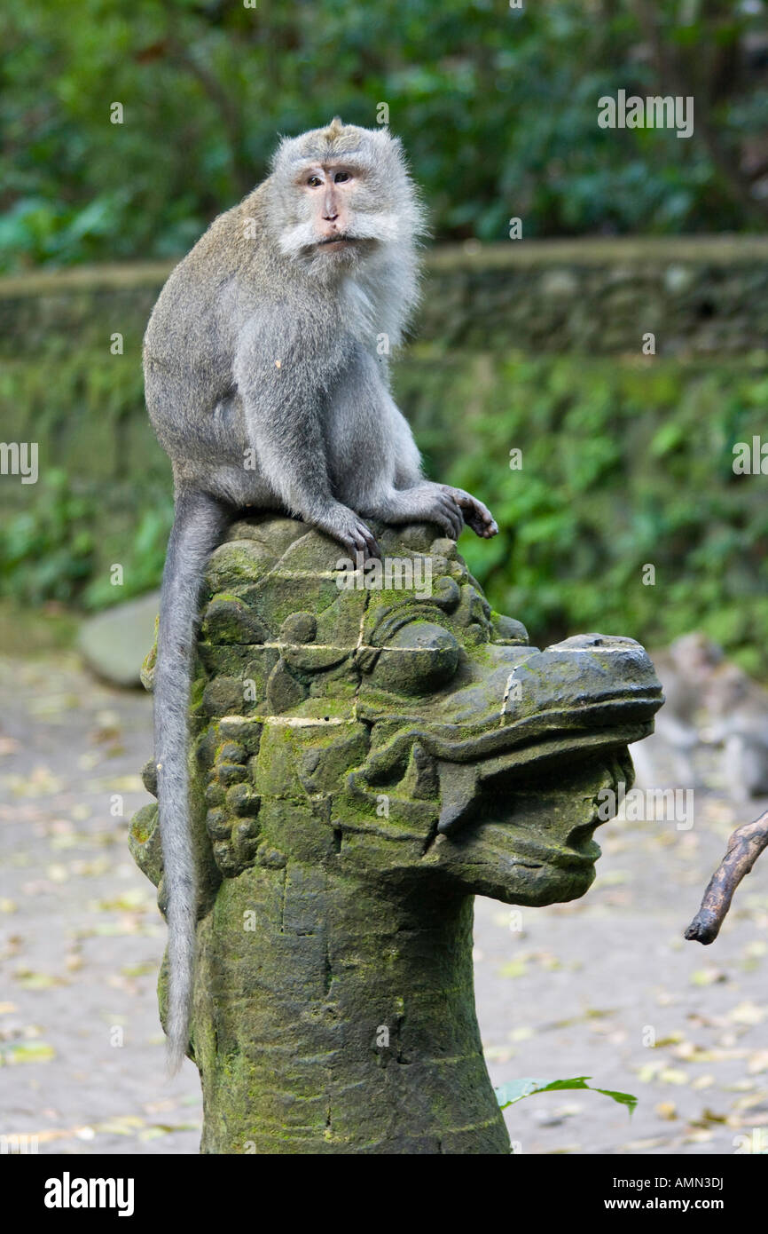 Sitting on a Stone Dragon Statue Long Tailed Macaques Macaca Fascicularis Monkey Forest Ubud Bali Indonesia - Stock Image