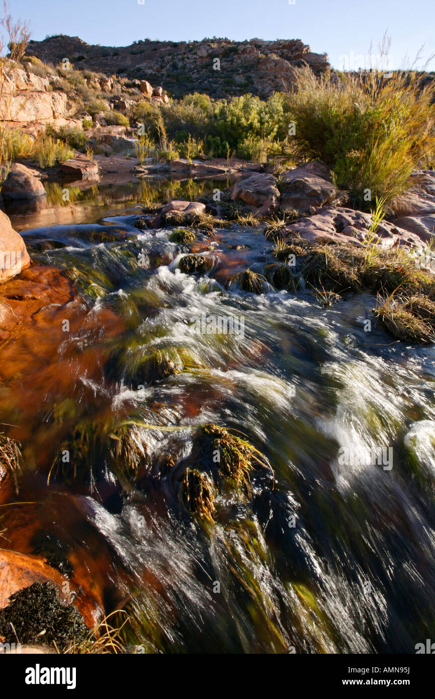 A clear mountain stream in the Cedarberg - Stock Image