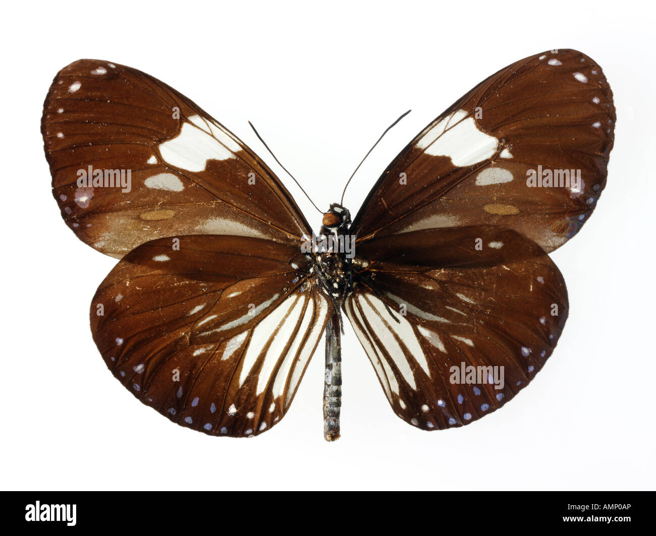 Butterfly close up - Stock Image
