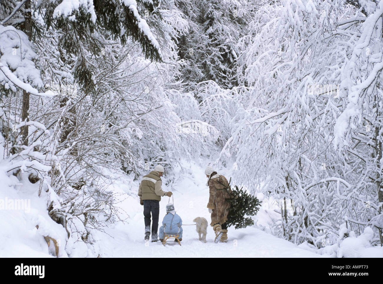 Family walking in snow, rear view - Stock Image