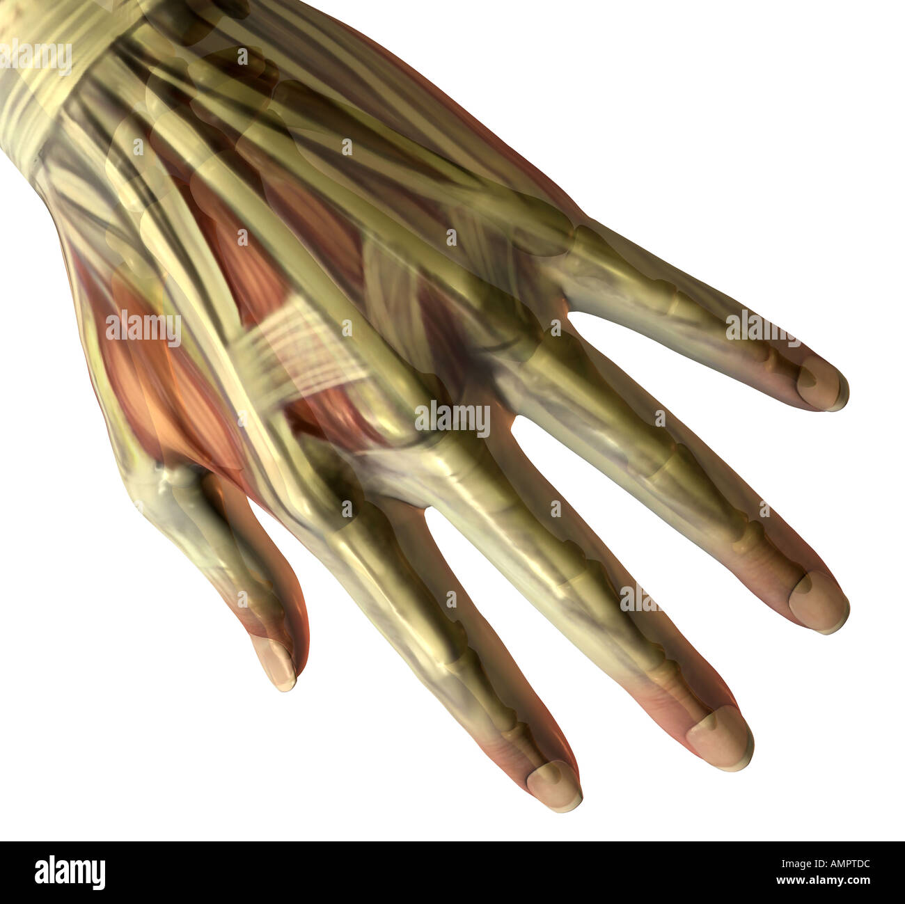 Pinky Finger Stock Photos & Pinky Finger Stock Images - Page 3 - Alamy
