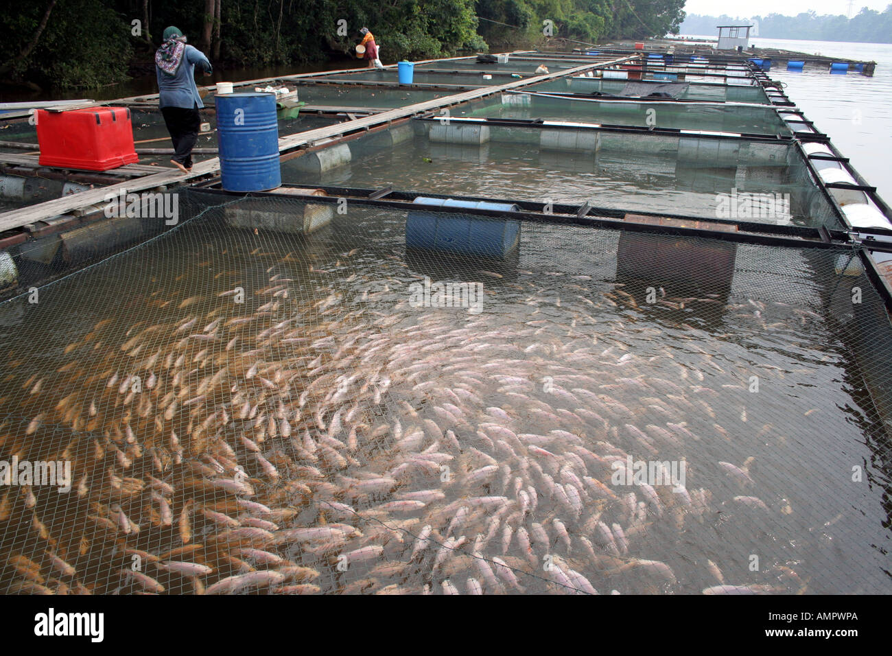 Fresh water fish farm in terengganu malaysia stock photo for Granja de peces ornamentales