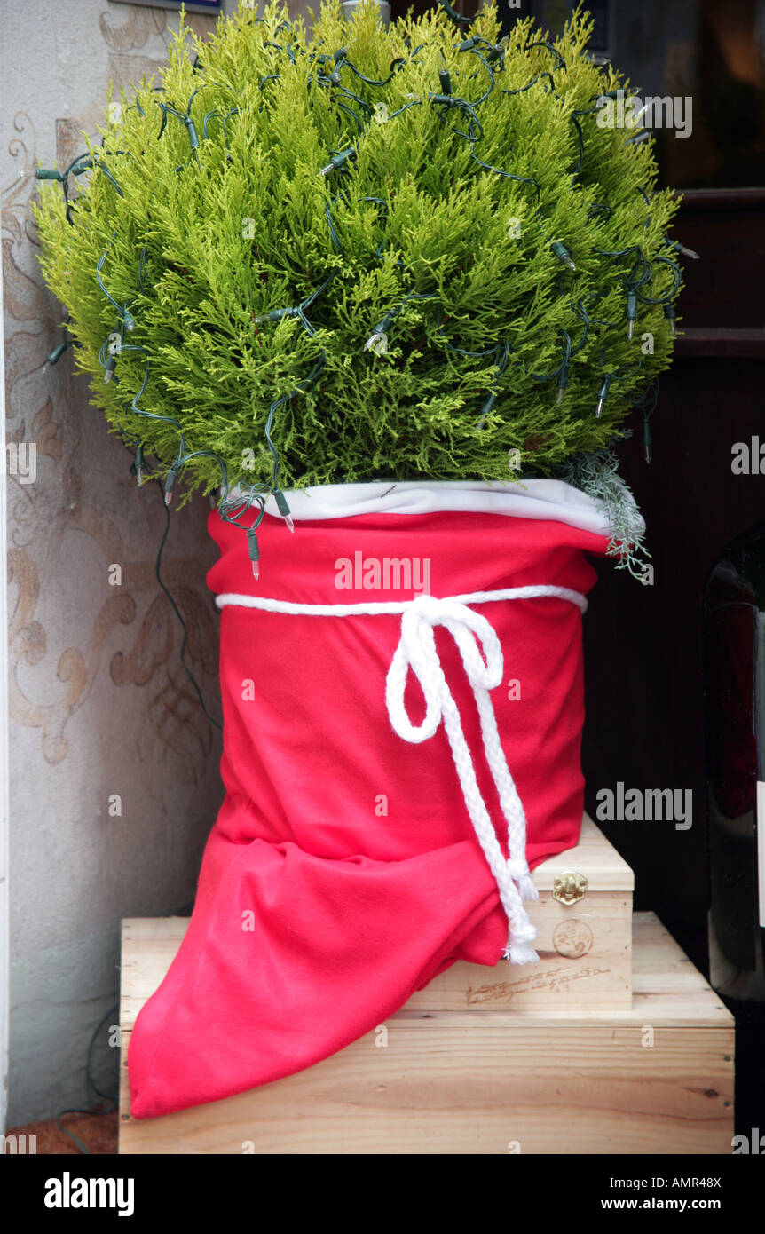 Pot plant conifer decorated for Christmas Zurich Old Town - Stock Image