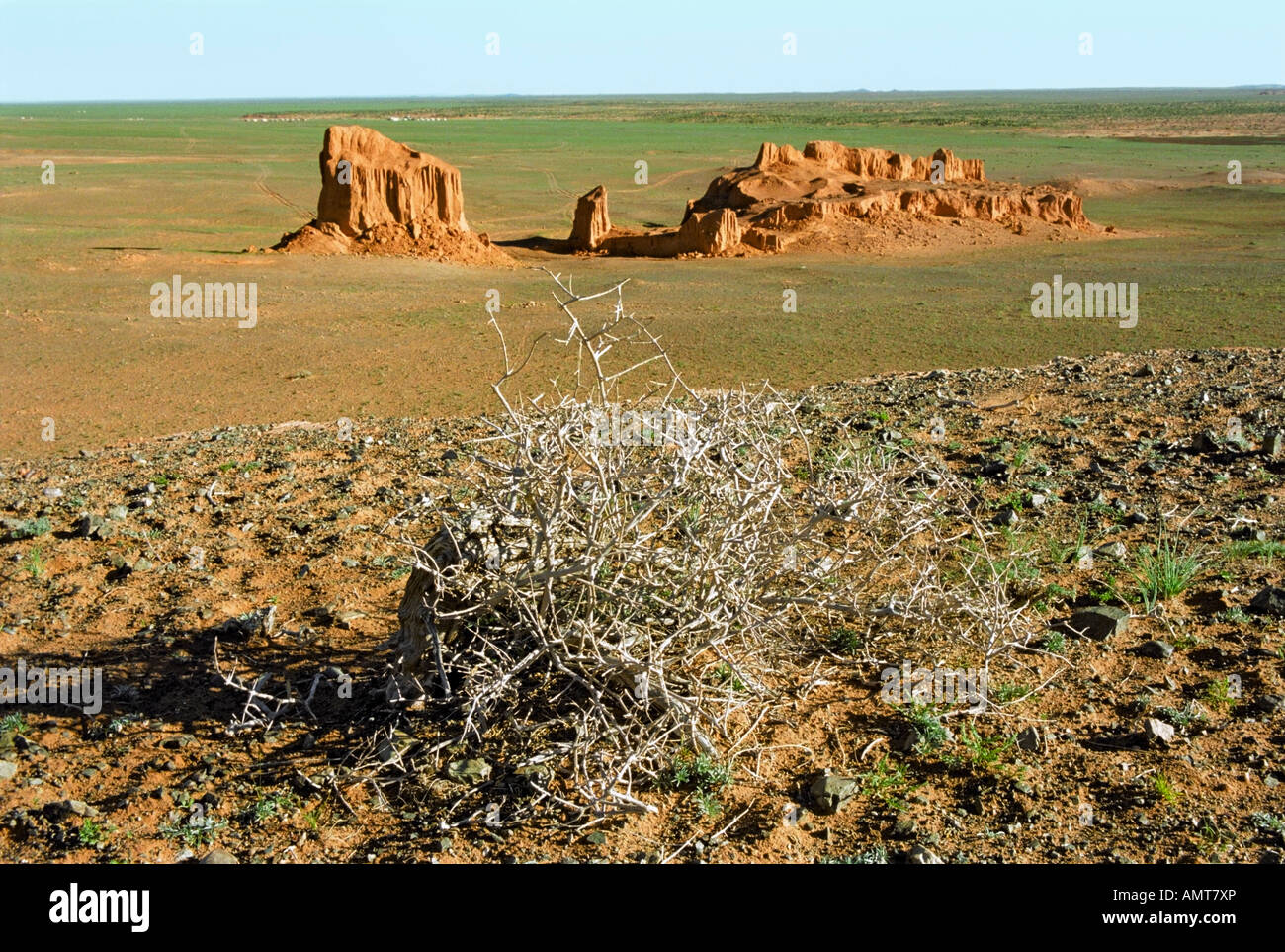 Dried bush of Tumbleweed and erosion formations of brown sedimentary minerals. Bayan Zag, South Gobi desert, Mongolia Stock Photo