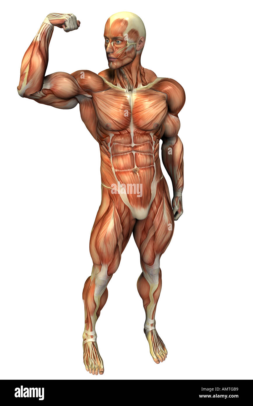 Muscular Body As Symbol For Bodybuilding Stock Photo 5005496 Alamy