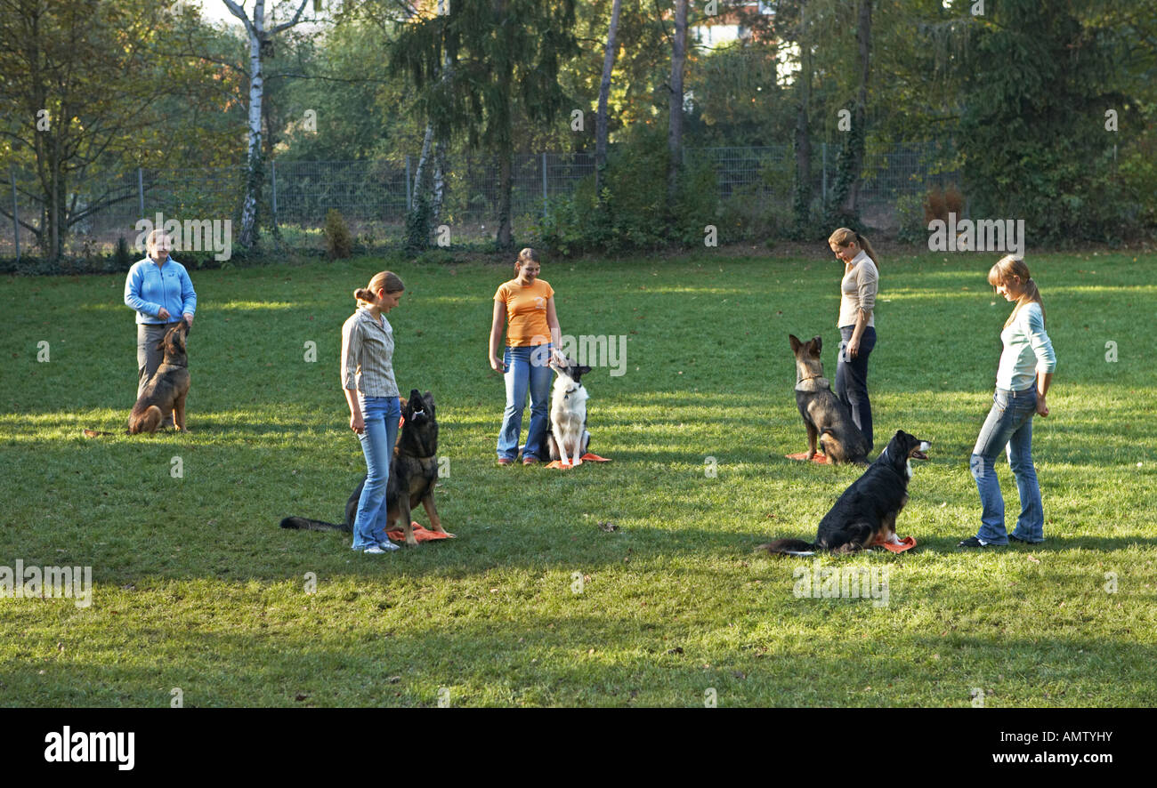 Obedience school for dogs - Stock Image