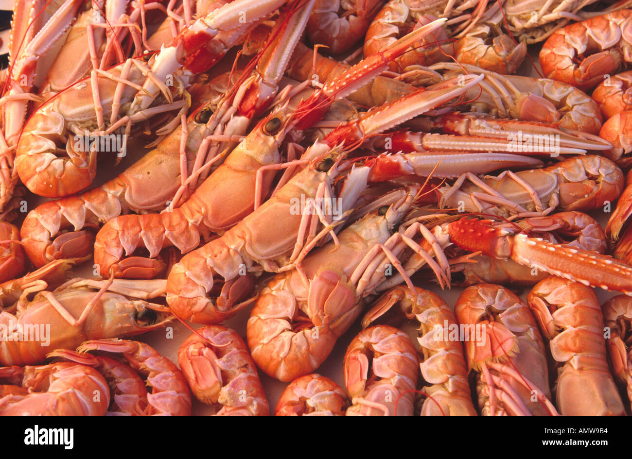 Langostines giant prawns caught sustainably in a MSC certified Stock