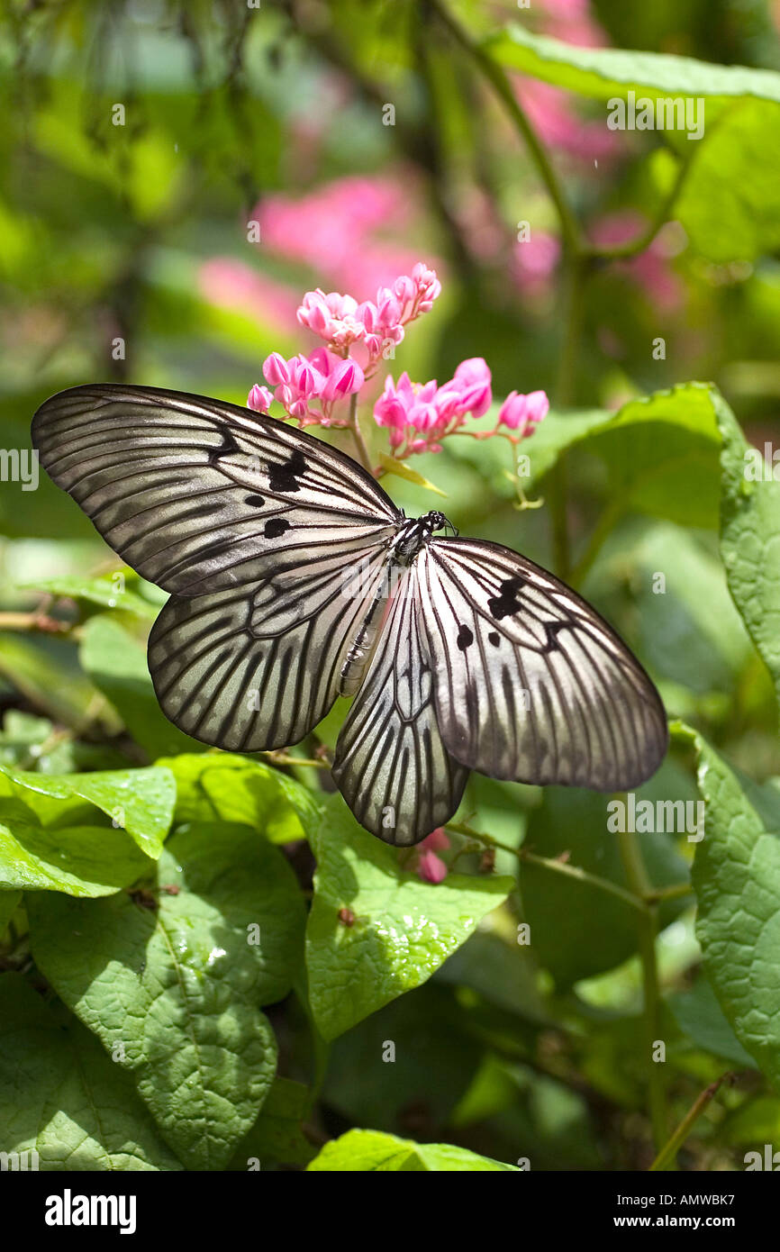 Butterlfy on a blossom - Stock Image