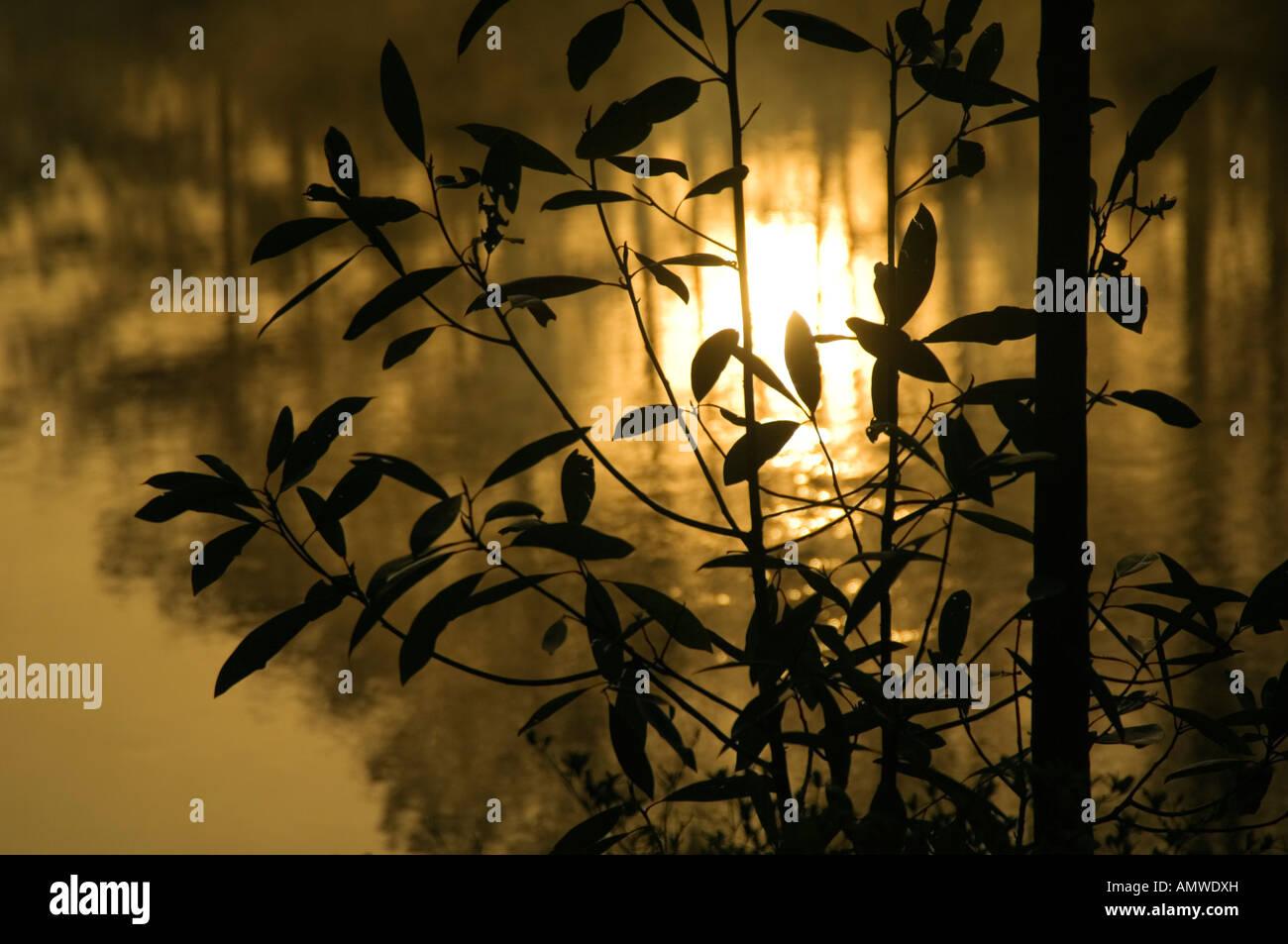 Callaway Garden Stock Photos & Callaway Garden Stock Images - Alamy