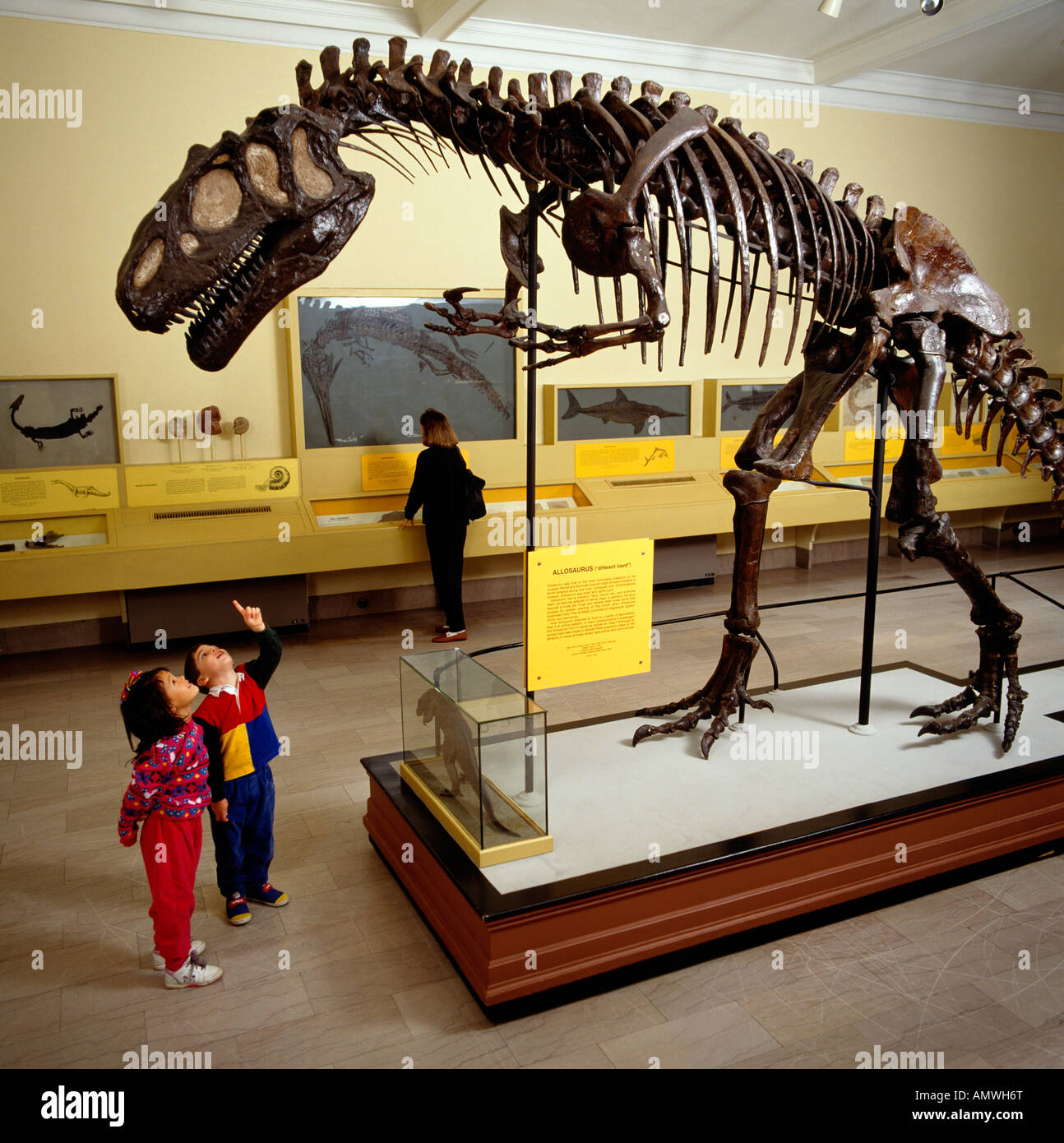 Dinosaur Hall At The Carnegie Museum Of Natural History, Pittsburgh, Pennsylvania, USA - Stock Image
