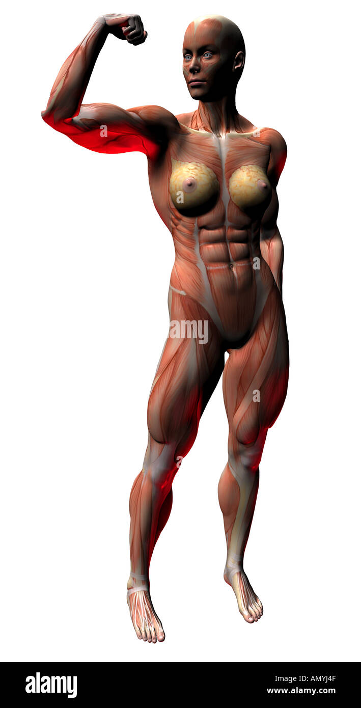 muscular body as symbol for bodybuilding Stock Photo: 5015118 - Alamy