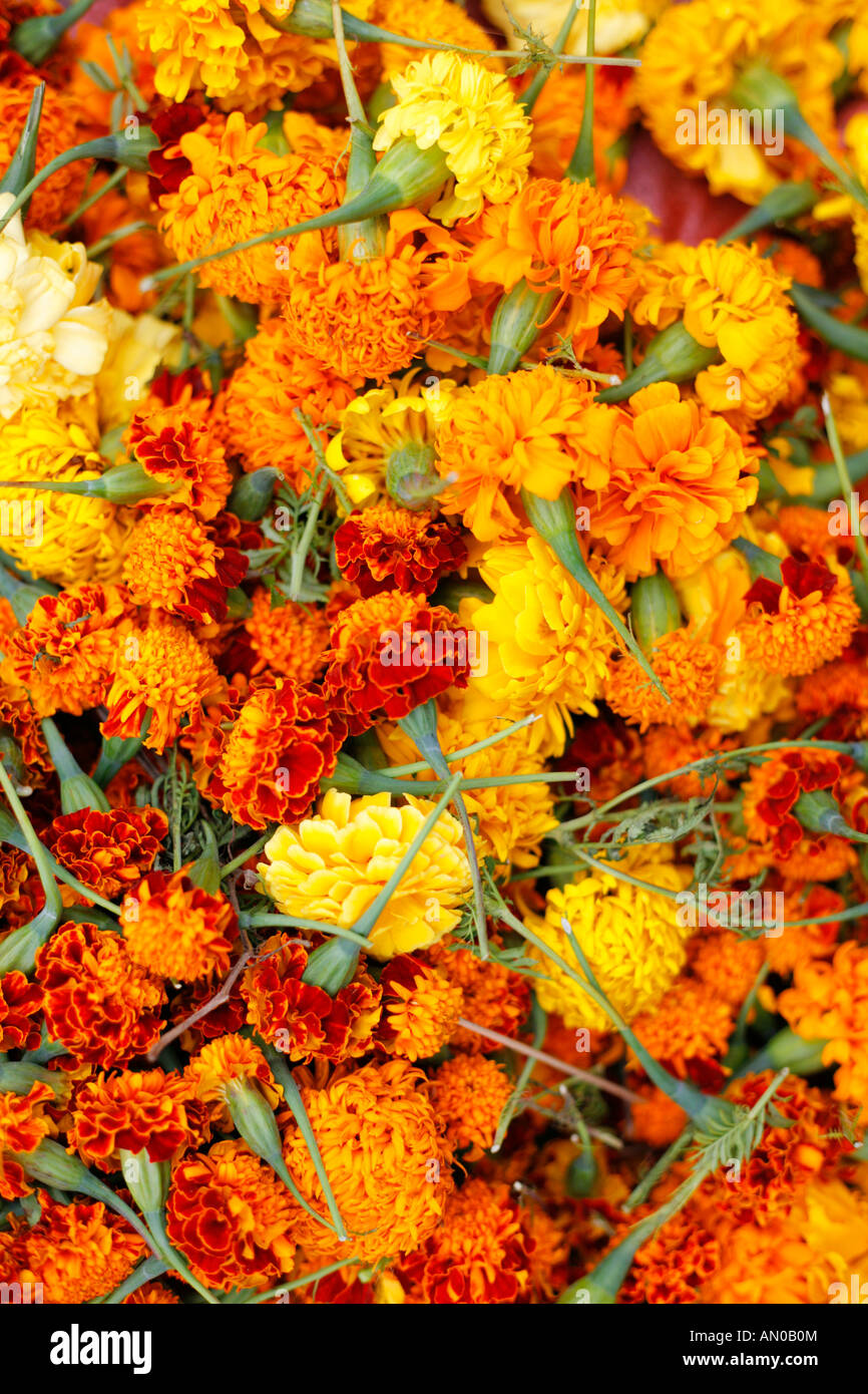 5b27d282458 Marigold flowers on sale in Luang Prabang Market in Laos Stock Photo ...