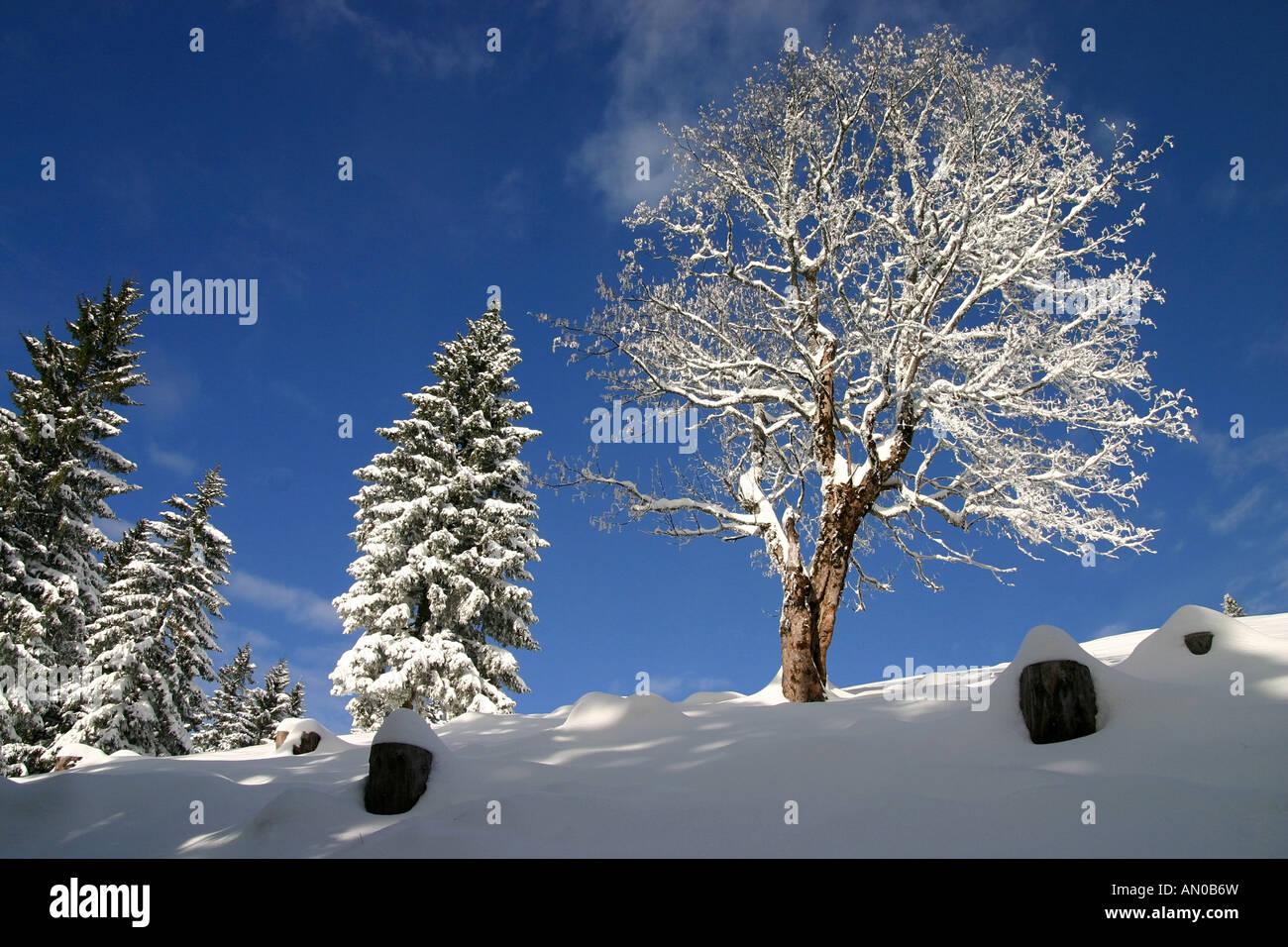 Verschneiter Baum in idyllischer Winterlandschaft   snow-covered tree in idyllic winter landscape Stock Photo