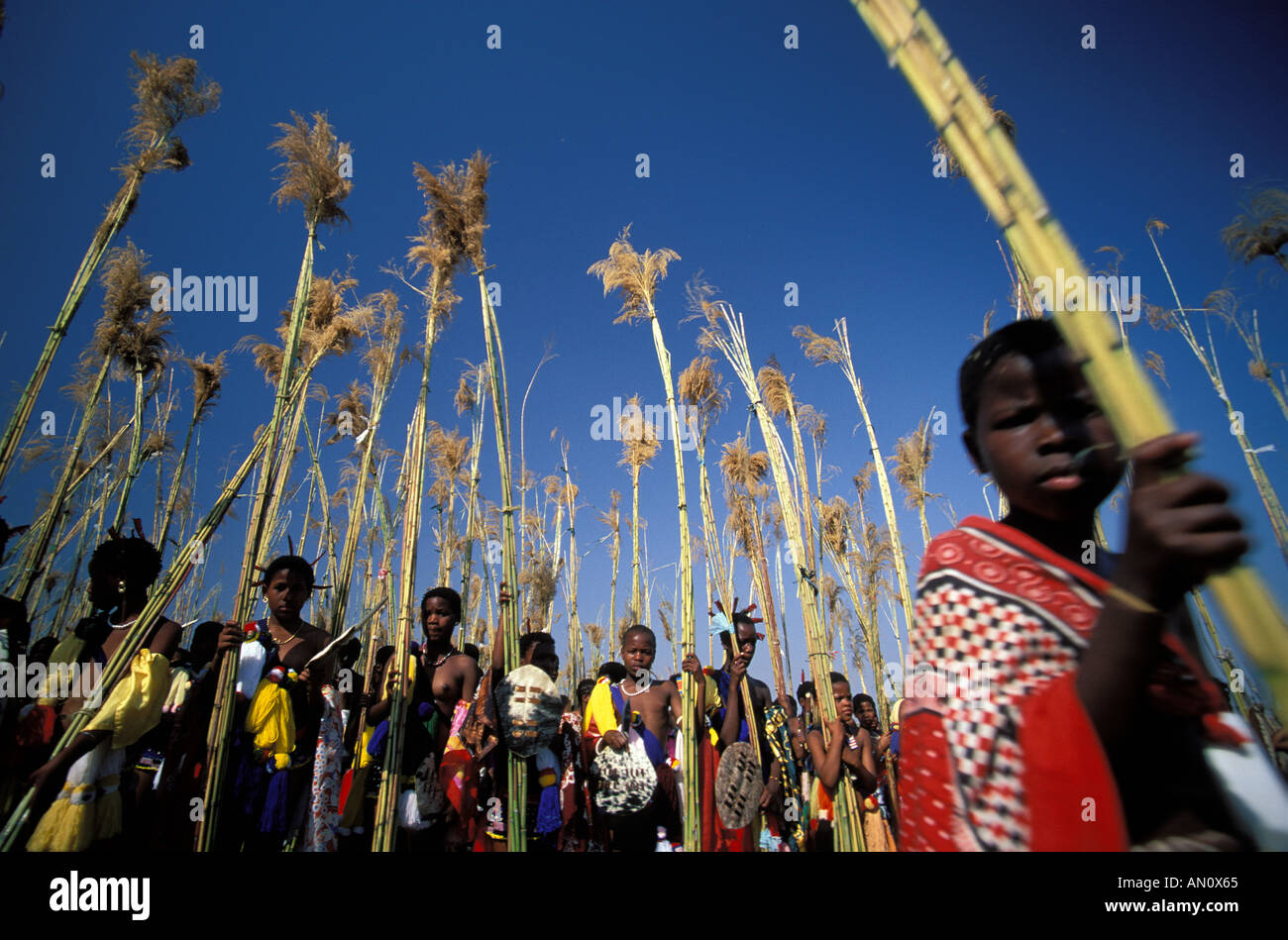 Young women of Swaziland collecting reed during the Umhlanga Stock Photo