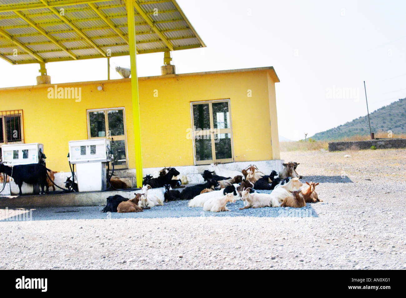 A gas station petrol station in the country side with free roaming goats are getting shelter in the shade from the scorching sun. Near Hani i Hoti close to the Montenegro border. Albania, Balkan, Europe. - Stock Image