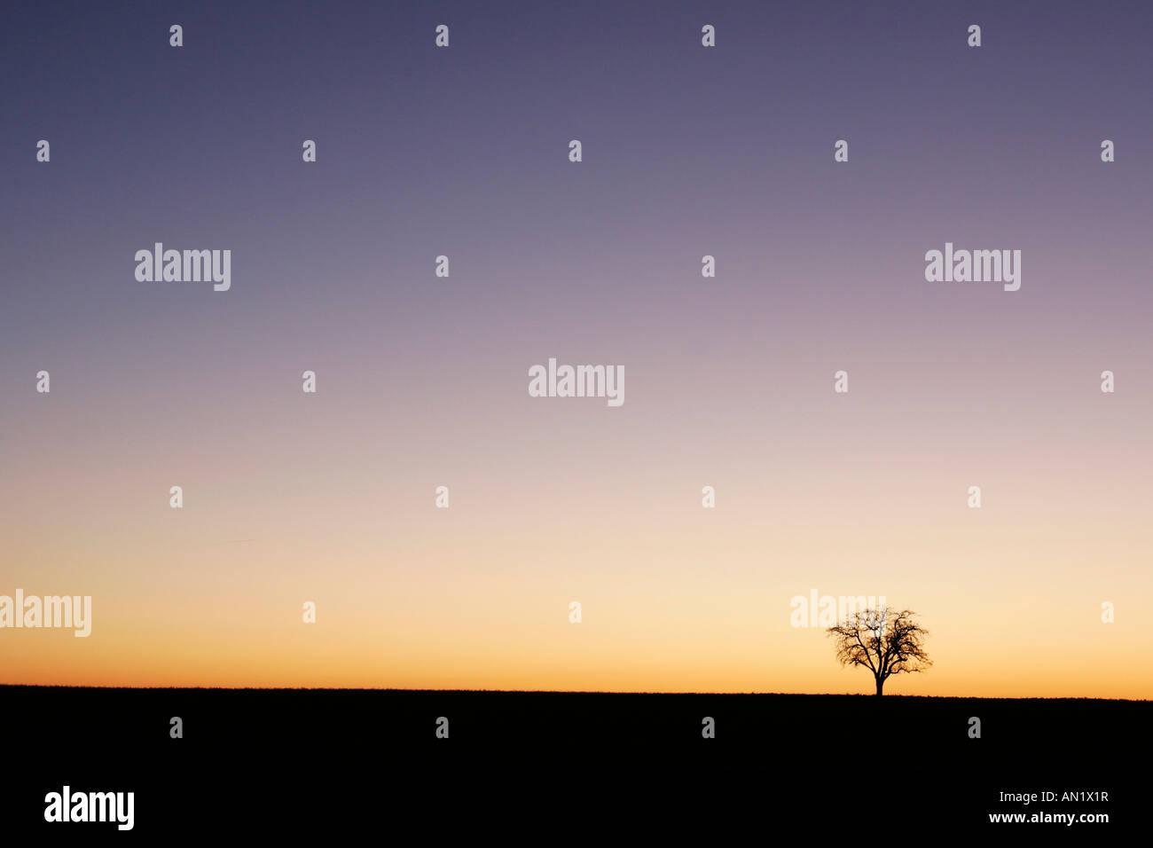 Baum im Sonnenaufgang Stock Photo